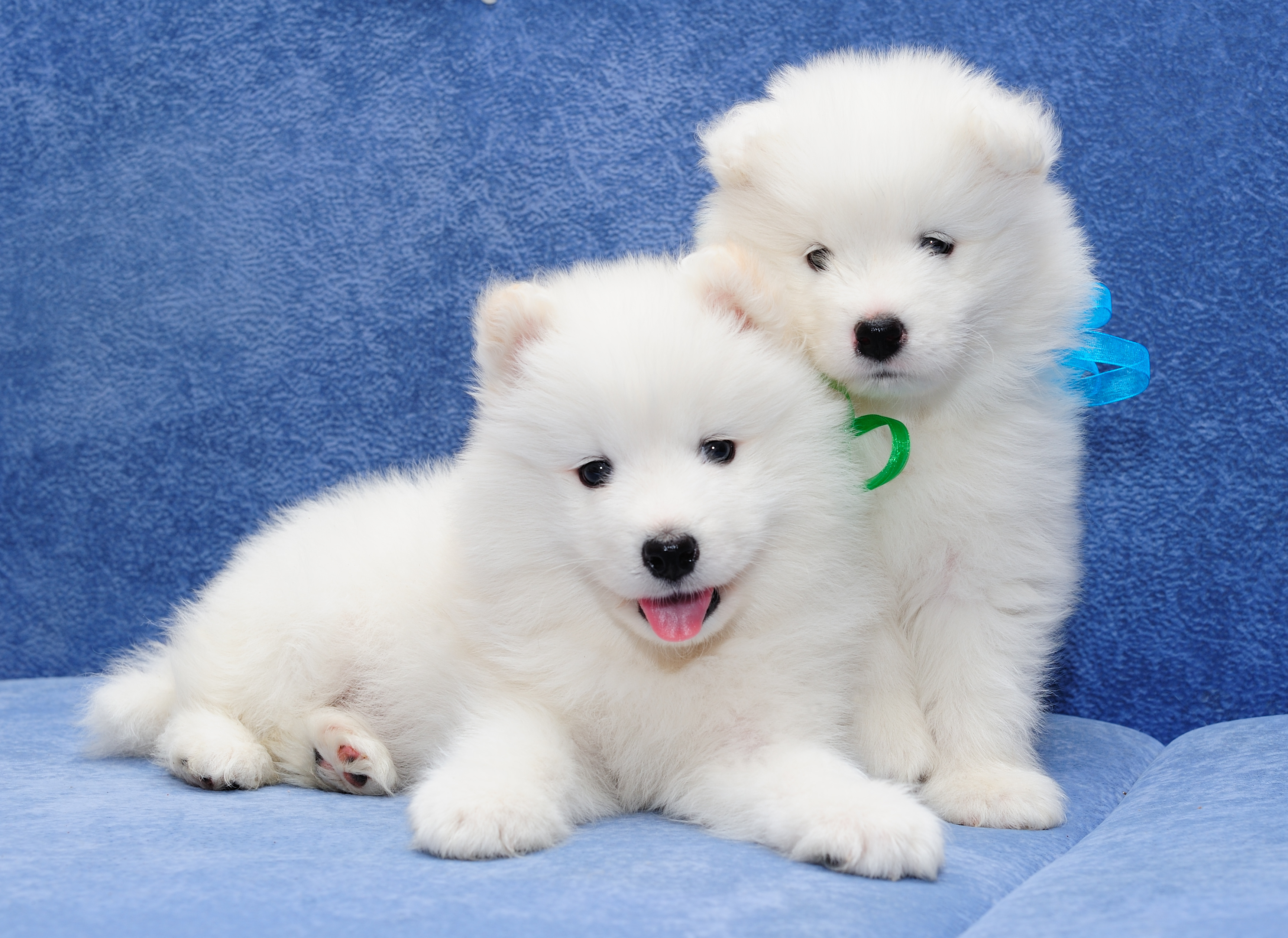Белый щеночек бесплатно