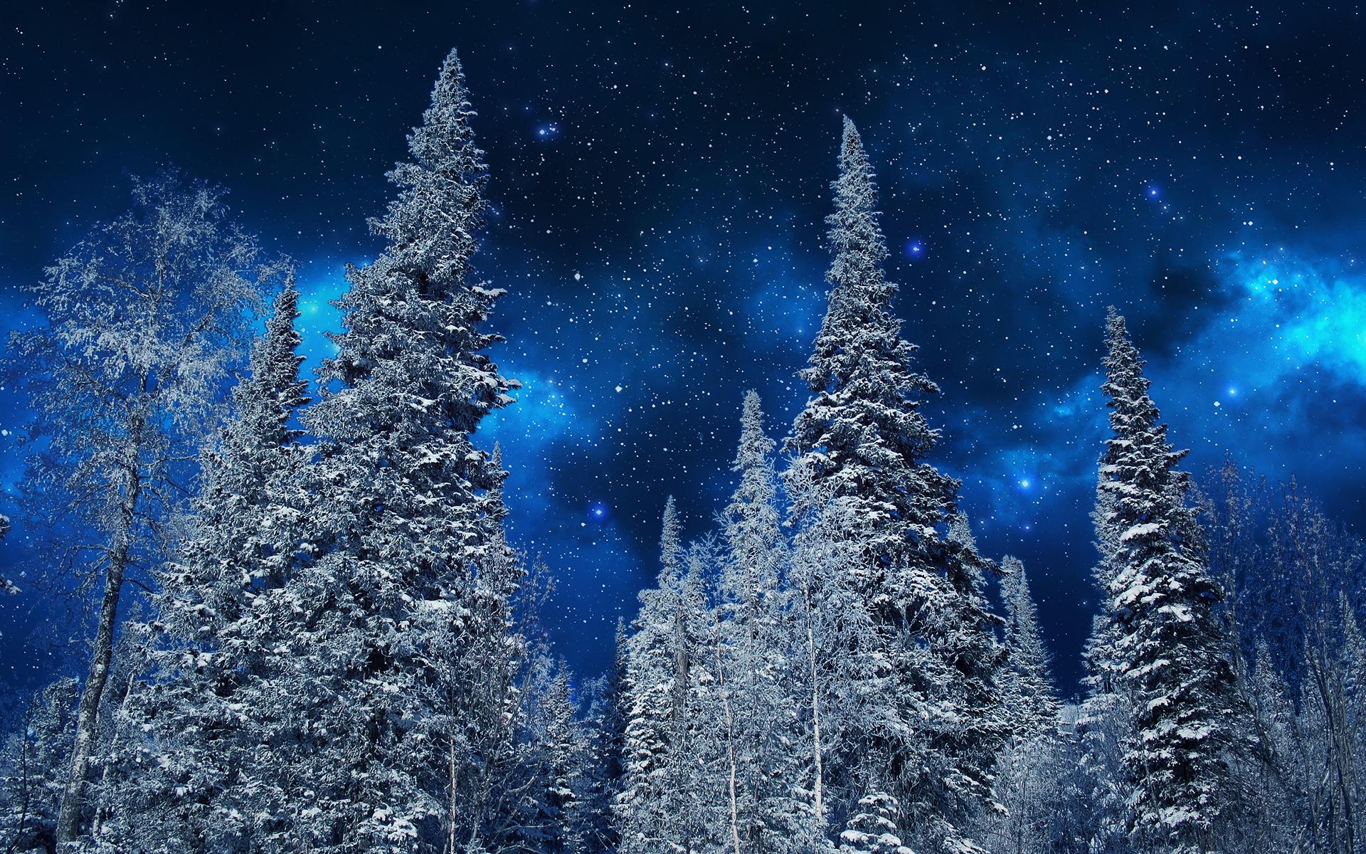 природа деревья ели зима снег небо  № 2803261  скачать
