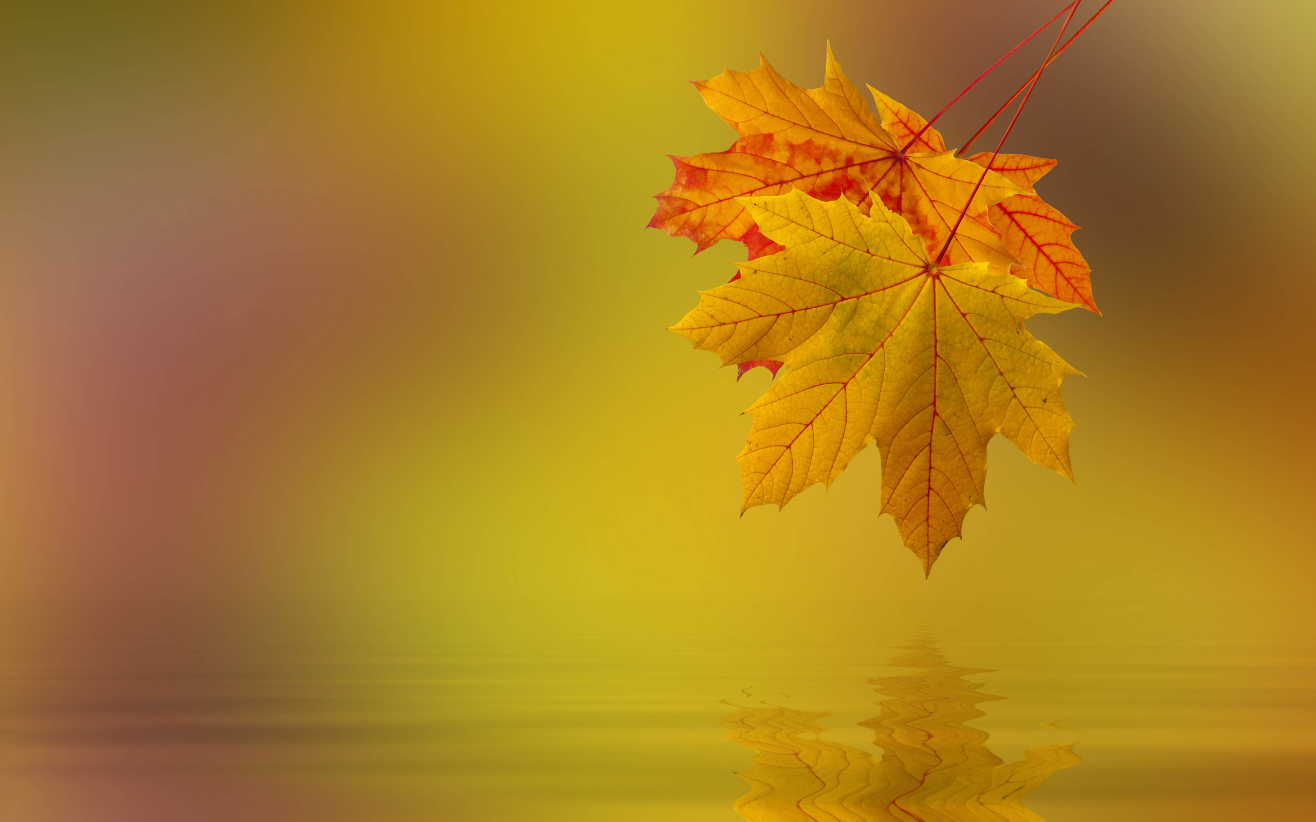 Картинки на презентацию осень, пинтерест