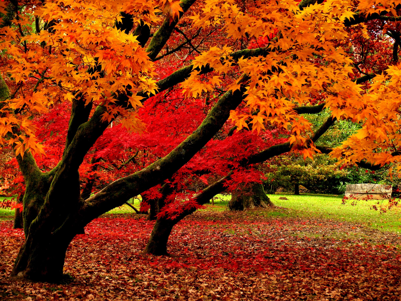 природа деревья листья осень nature trees leaves autumn  № 1036916 загрузить