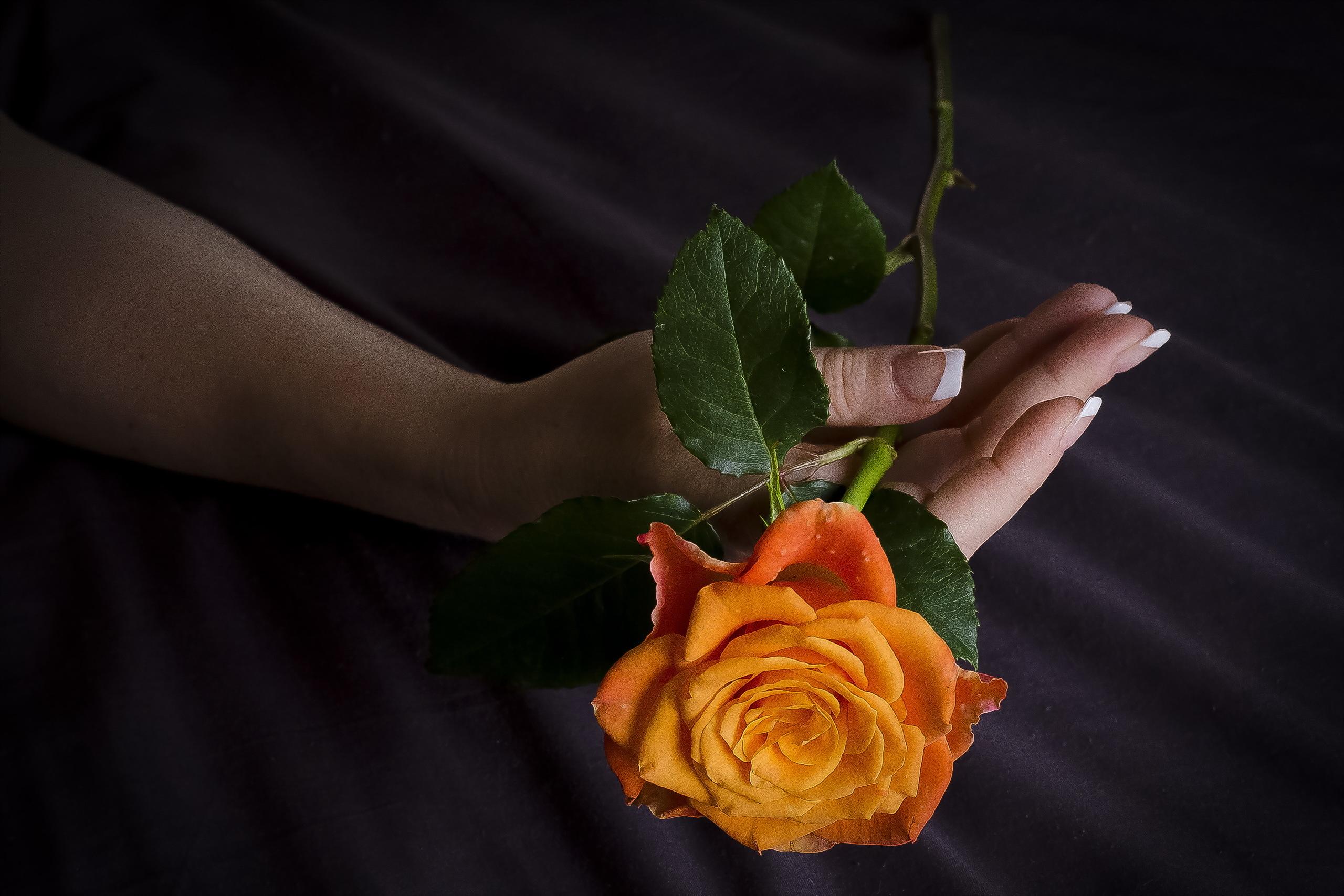 Бутоны и лепестки студия цветов и подарков 65