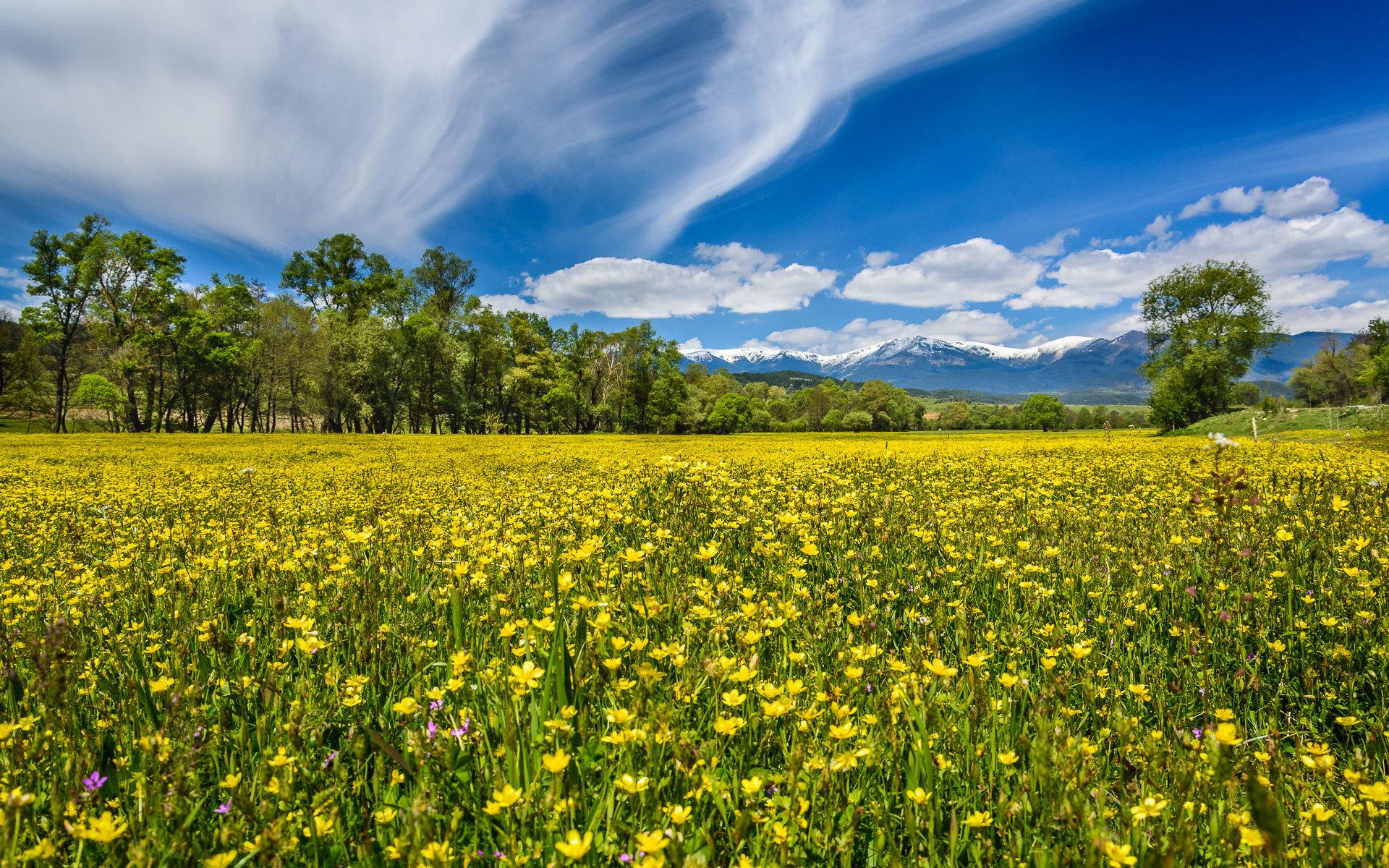Поздравление, картинки поля с цветами и речкой