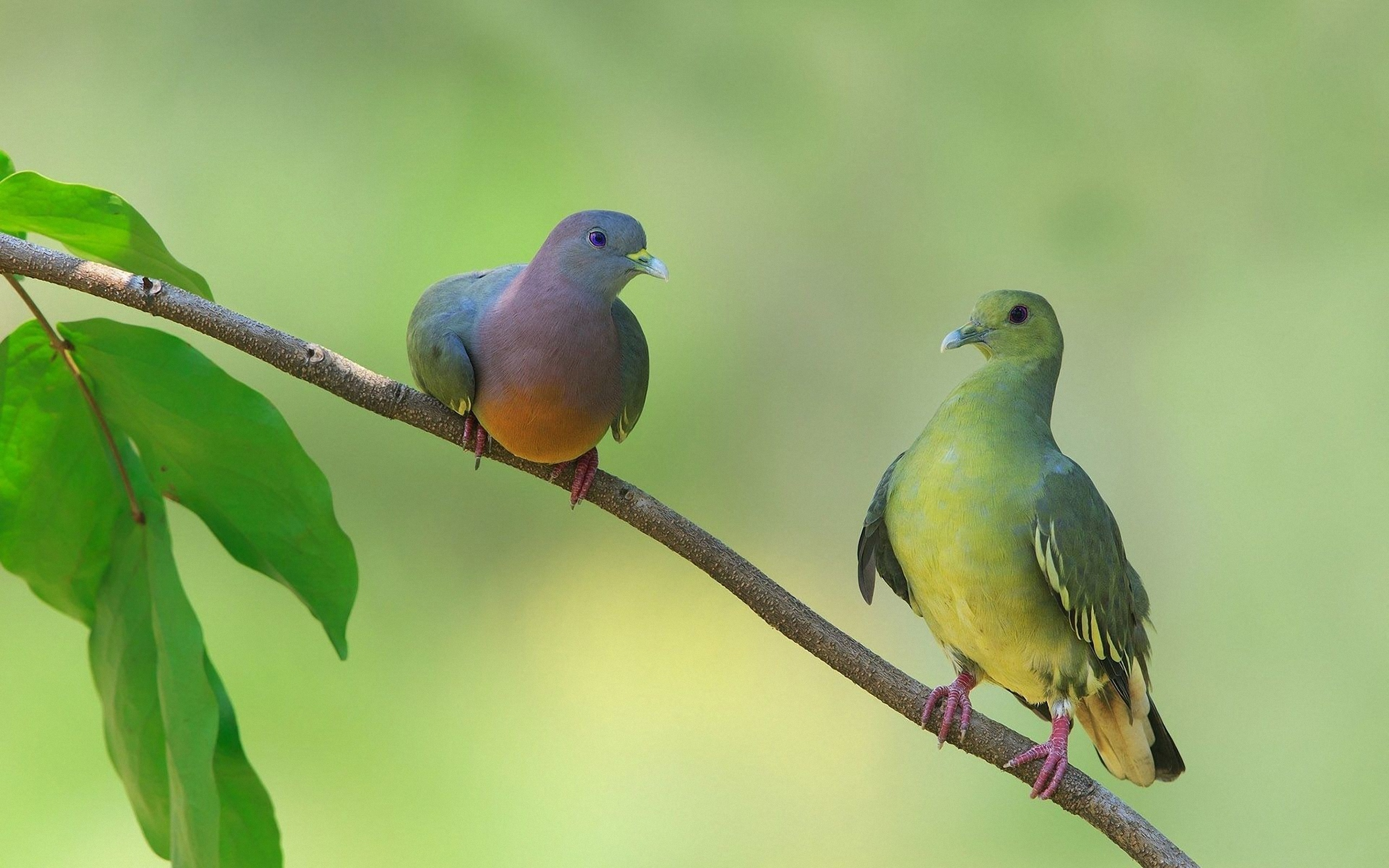 природа белые птицы ветка голуби бесплатно