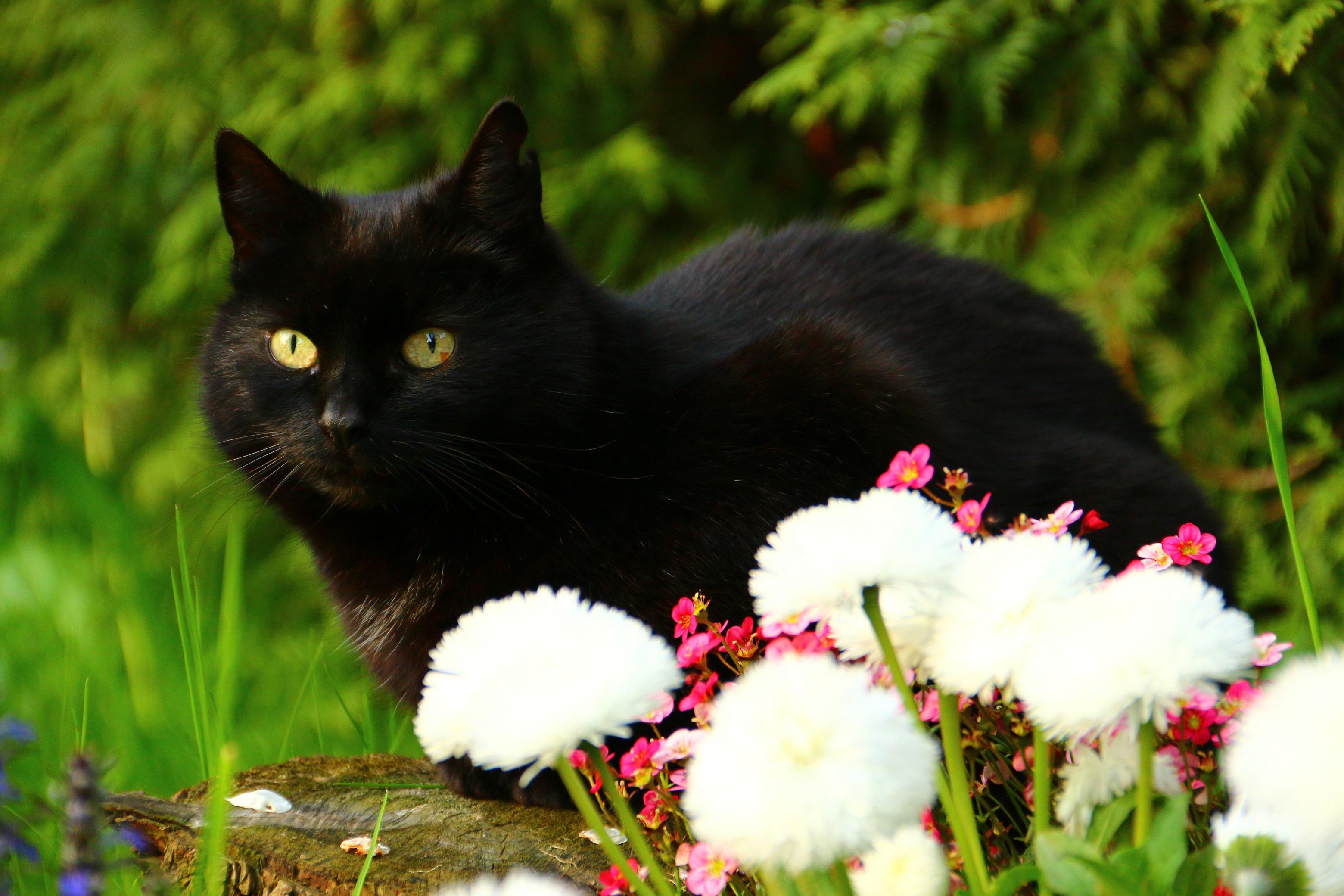 природа животные кот котенок черный  № 654434  скачать