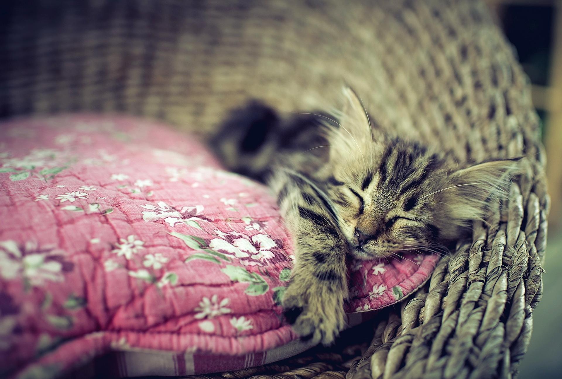 фотографируются картинка кошка уютно спит приобрели эту вкусную