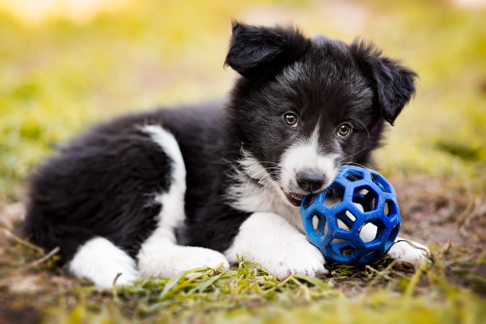 словам александра, картинка собака с мячиком если