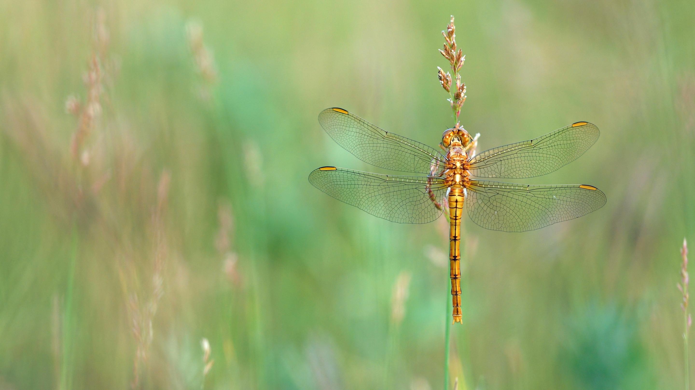 природа животные макро стрекоза трава загрузить