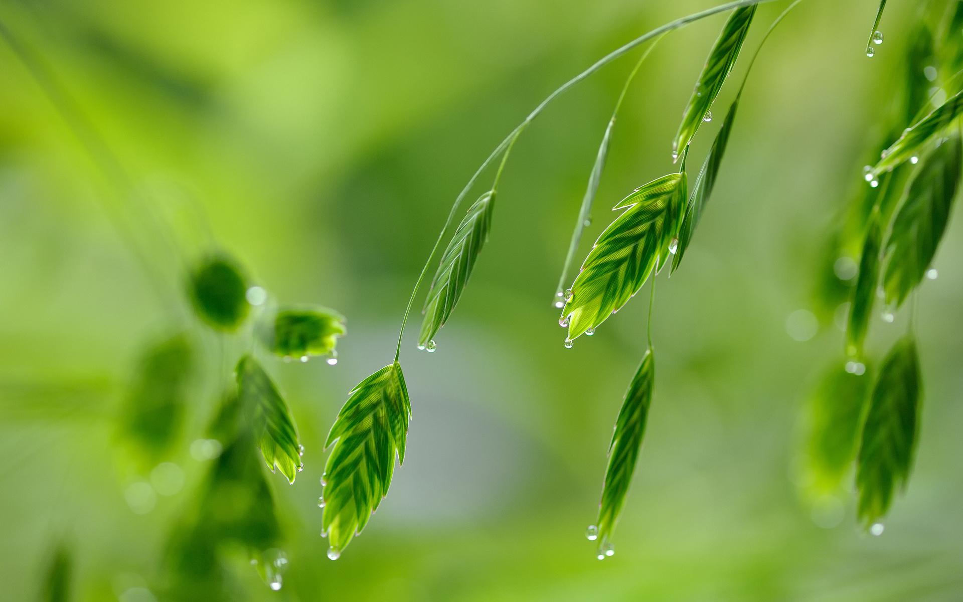 Обои для рабочего стола листья трава