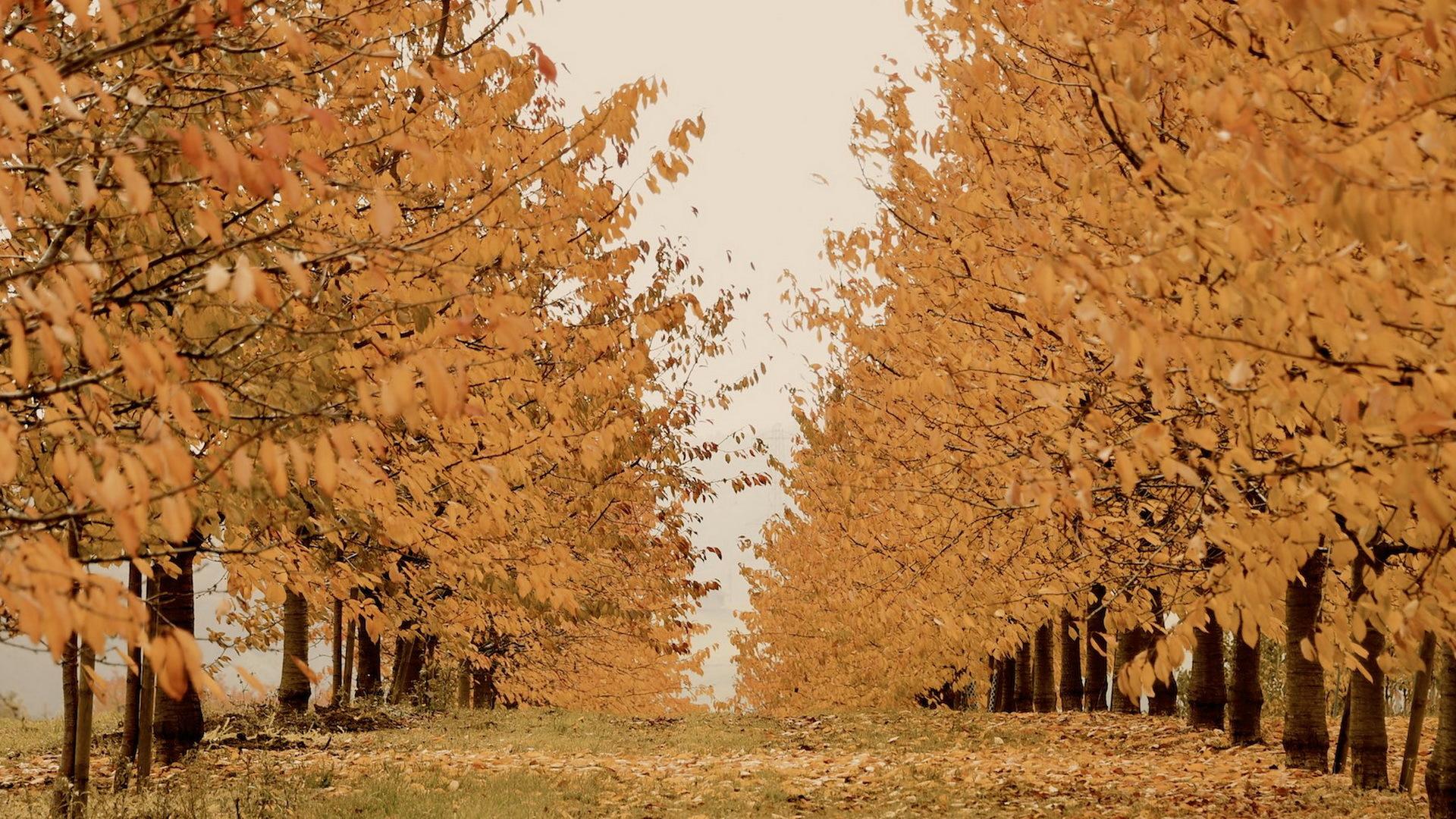 осенние деревья без смс