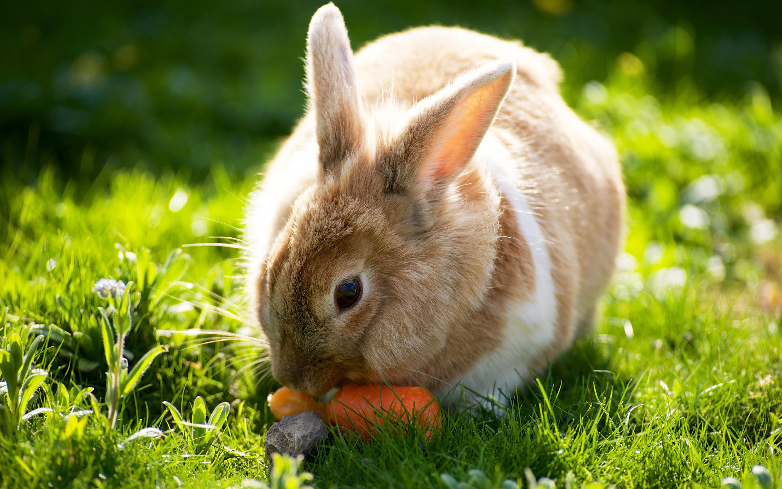 Кролик, морковка, собака скачать