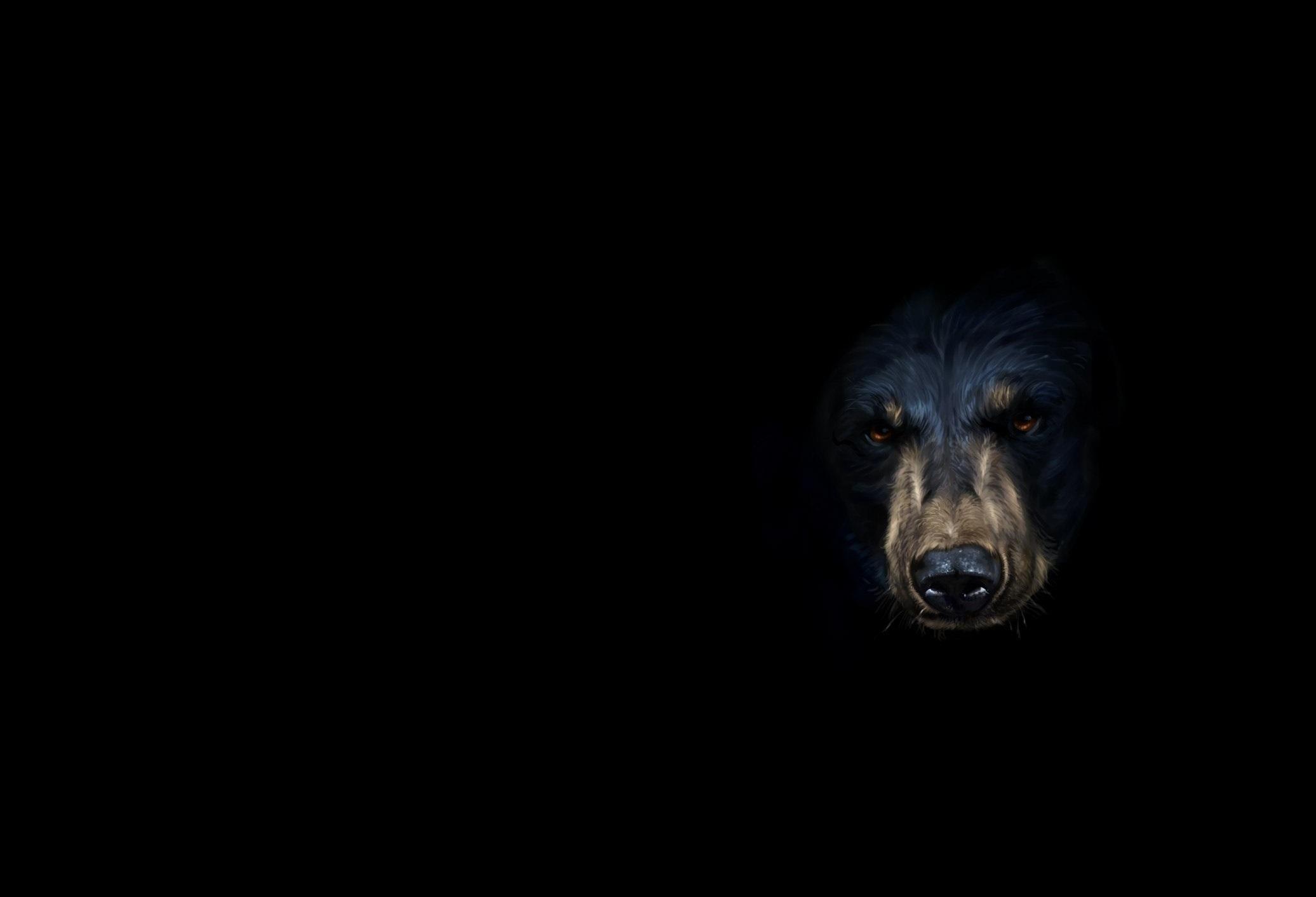 Черны медведь  № 3207562  скачать