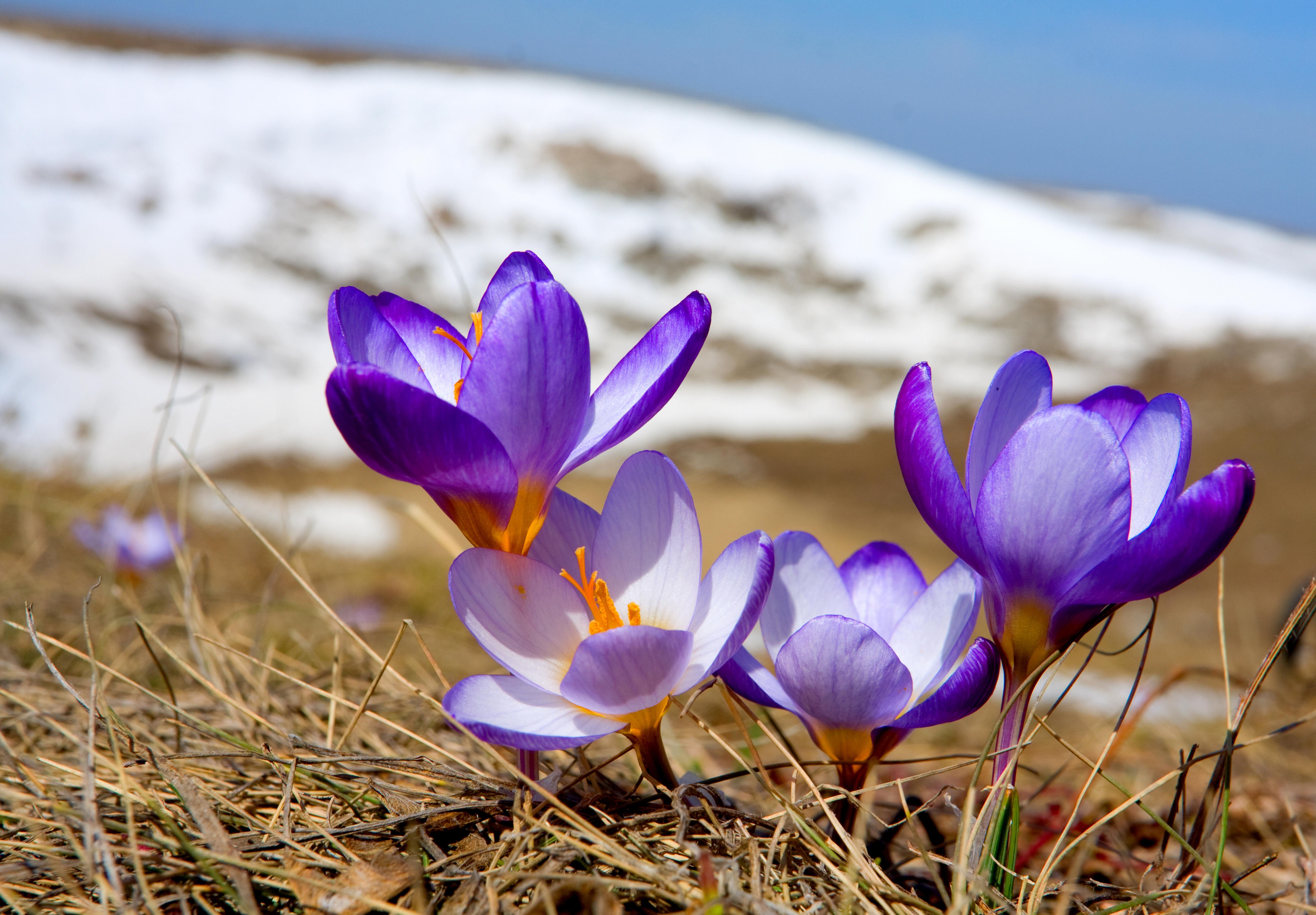 радость весна классные фото школу завтра вставать