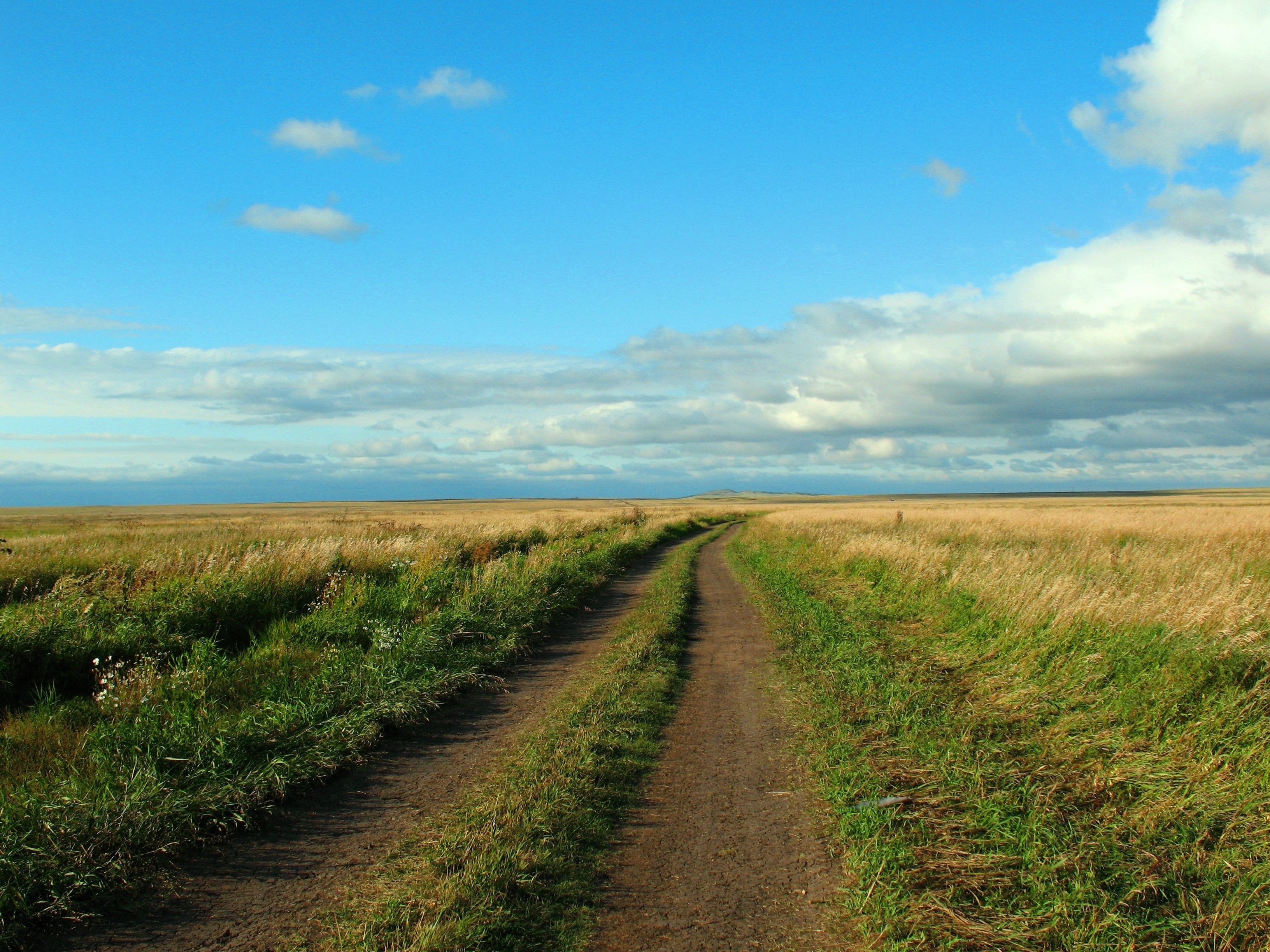 желто-зеленая дорога в степи  № 252749 загрузить
