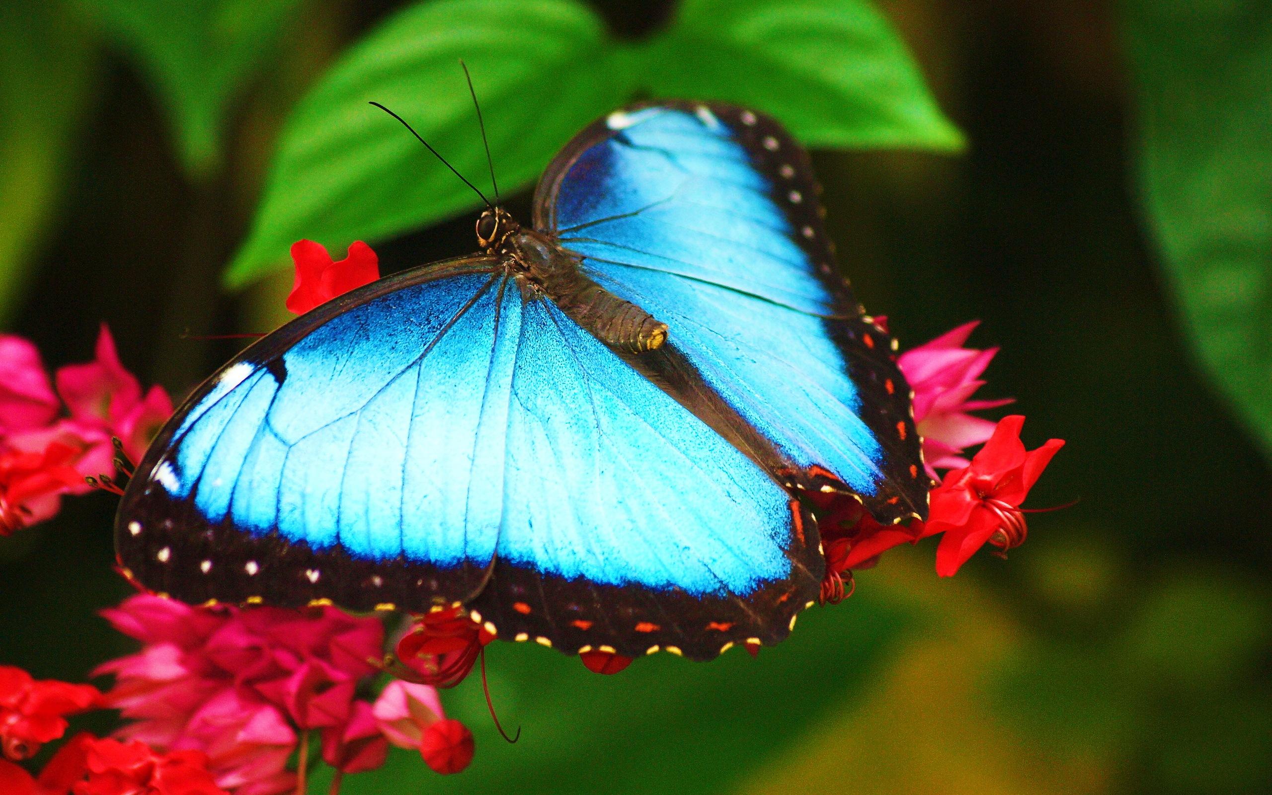 Красавица с бабочкой бесплатно