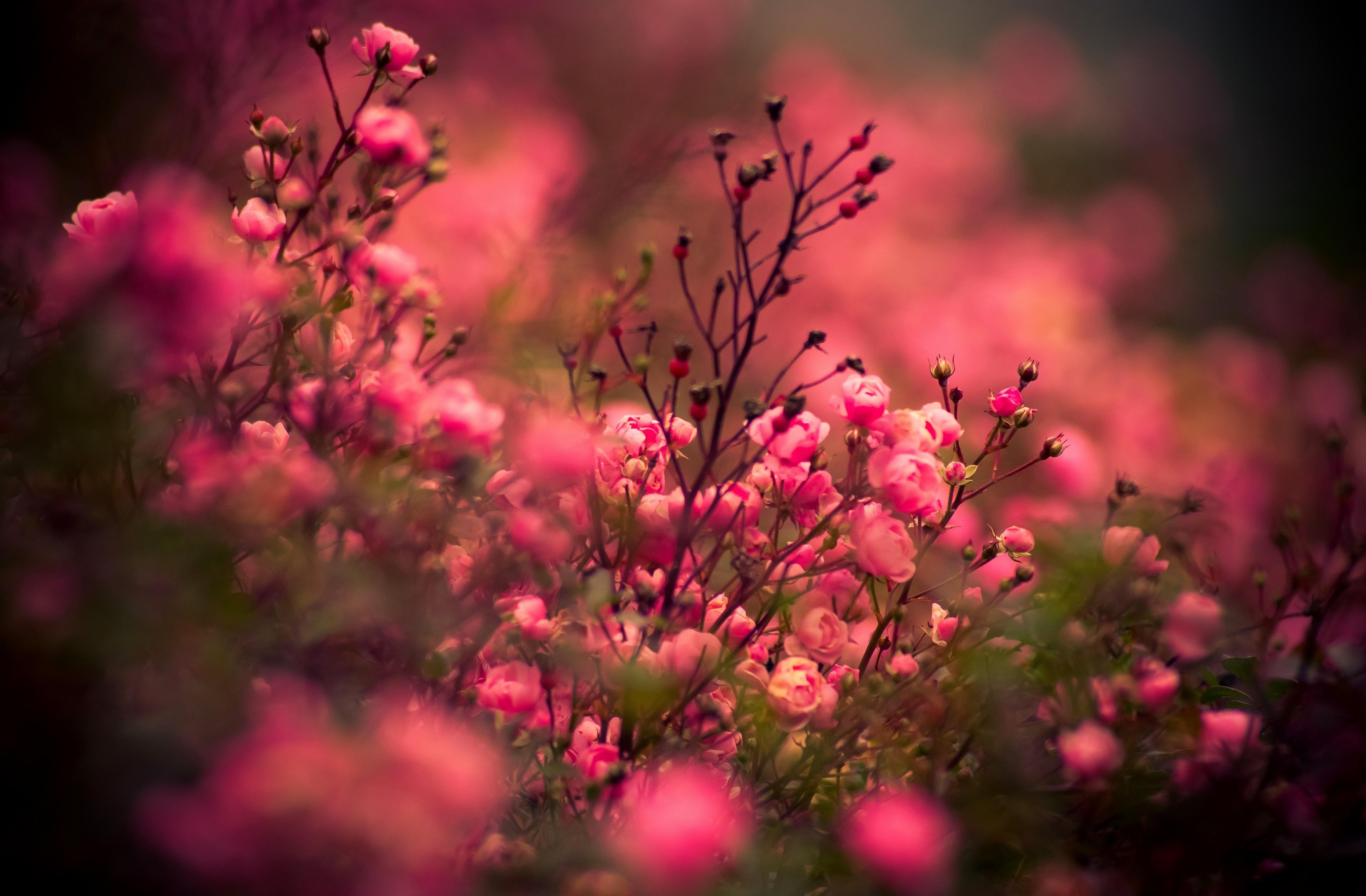 большие фотографии профессионалов цветов кардинальные изменения