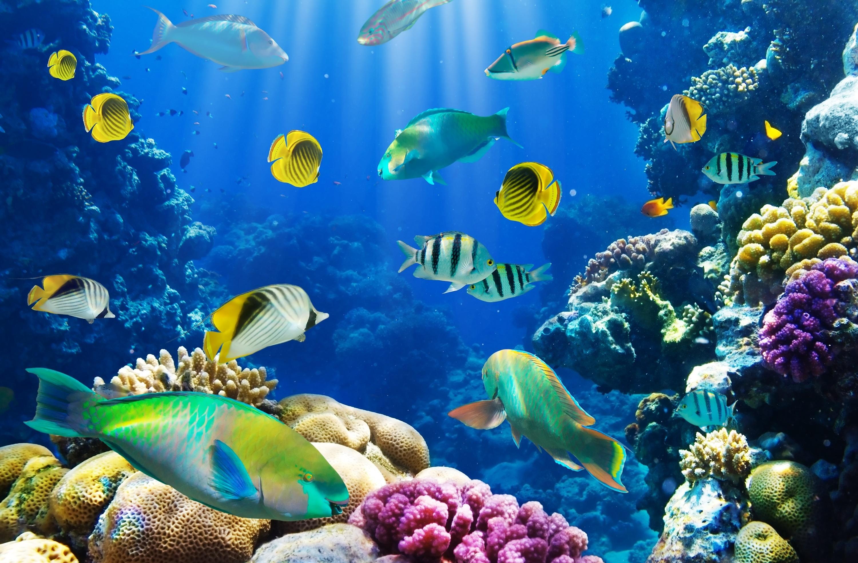 корневого сельдерея картинки море с рыбами все-таки бывают ситуации