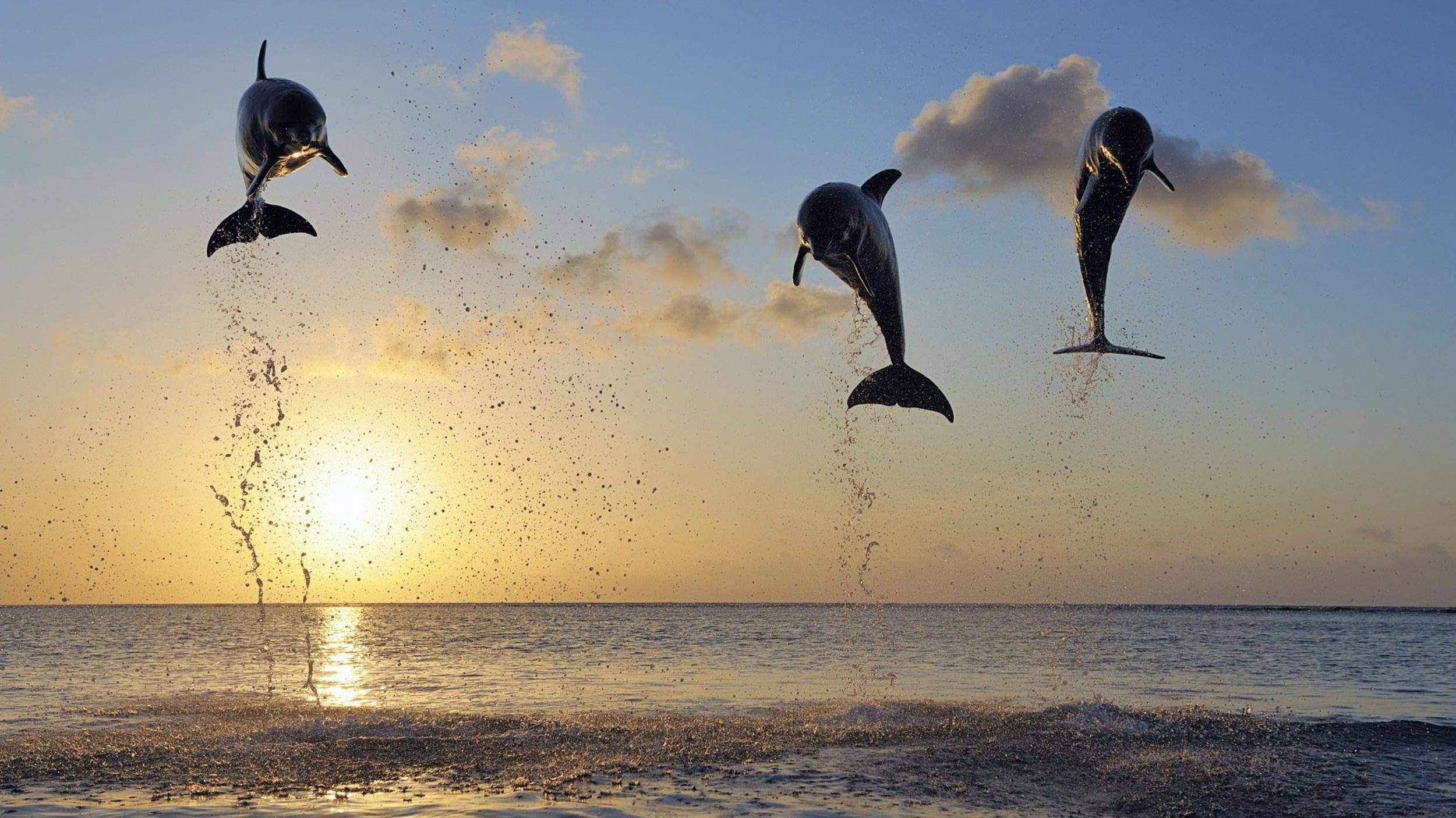 Красивые, суперского настроения и море позитива картинки