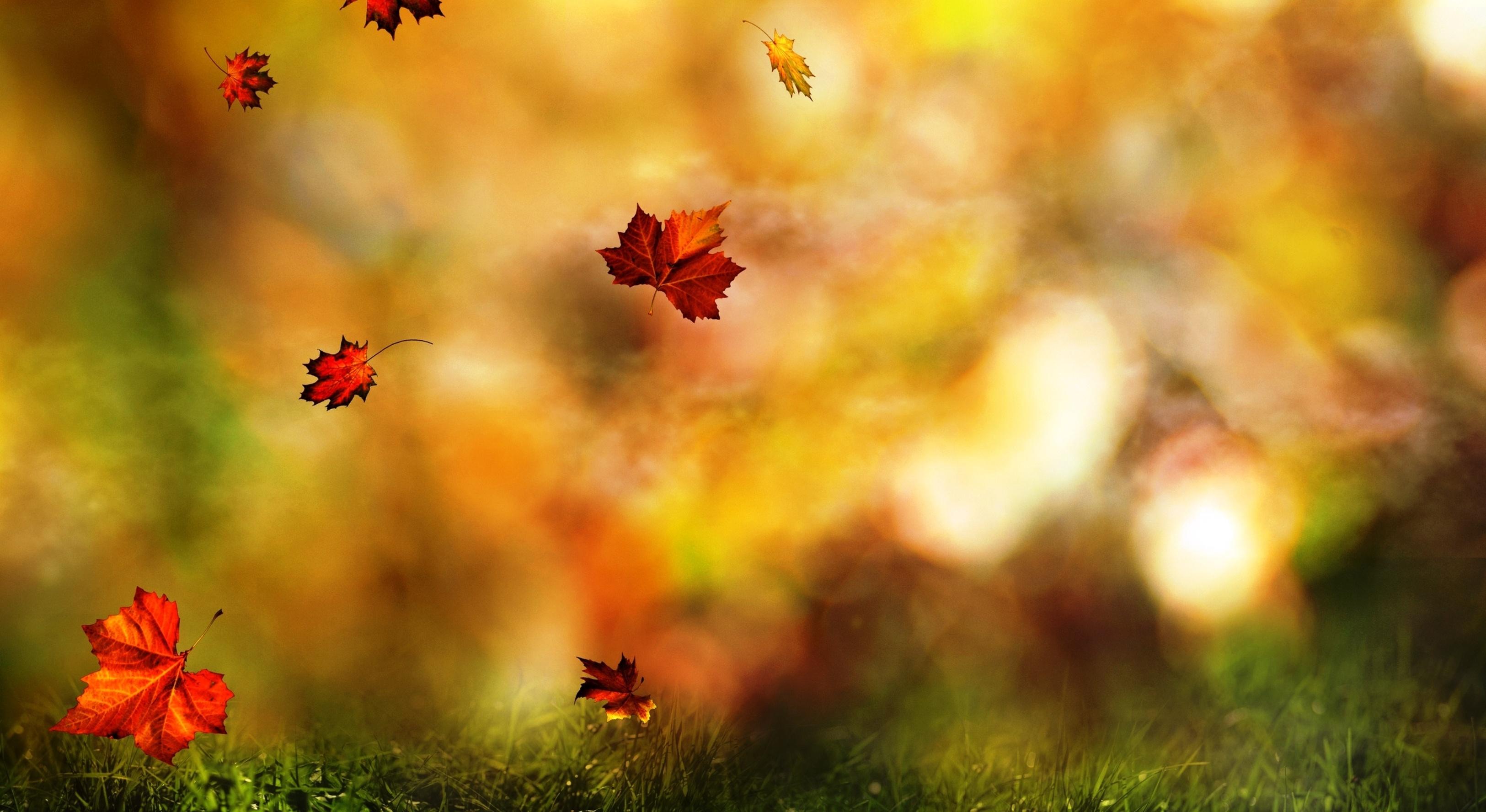 листья осенние размытый фон без смс
