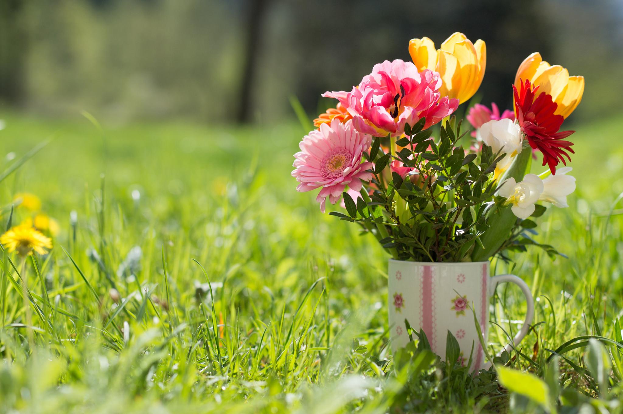 природа цветы чашка  № 1486732 без смс