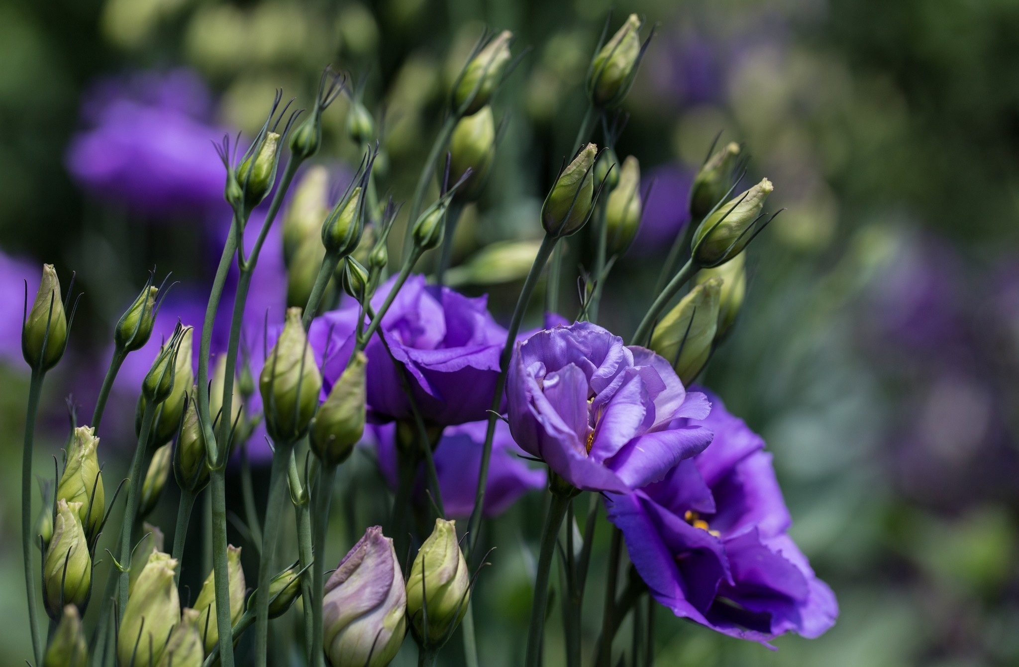 Картинка семечко росток побег бутон цветок что люди