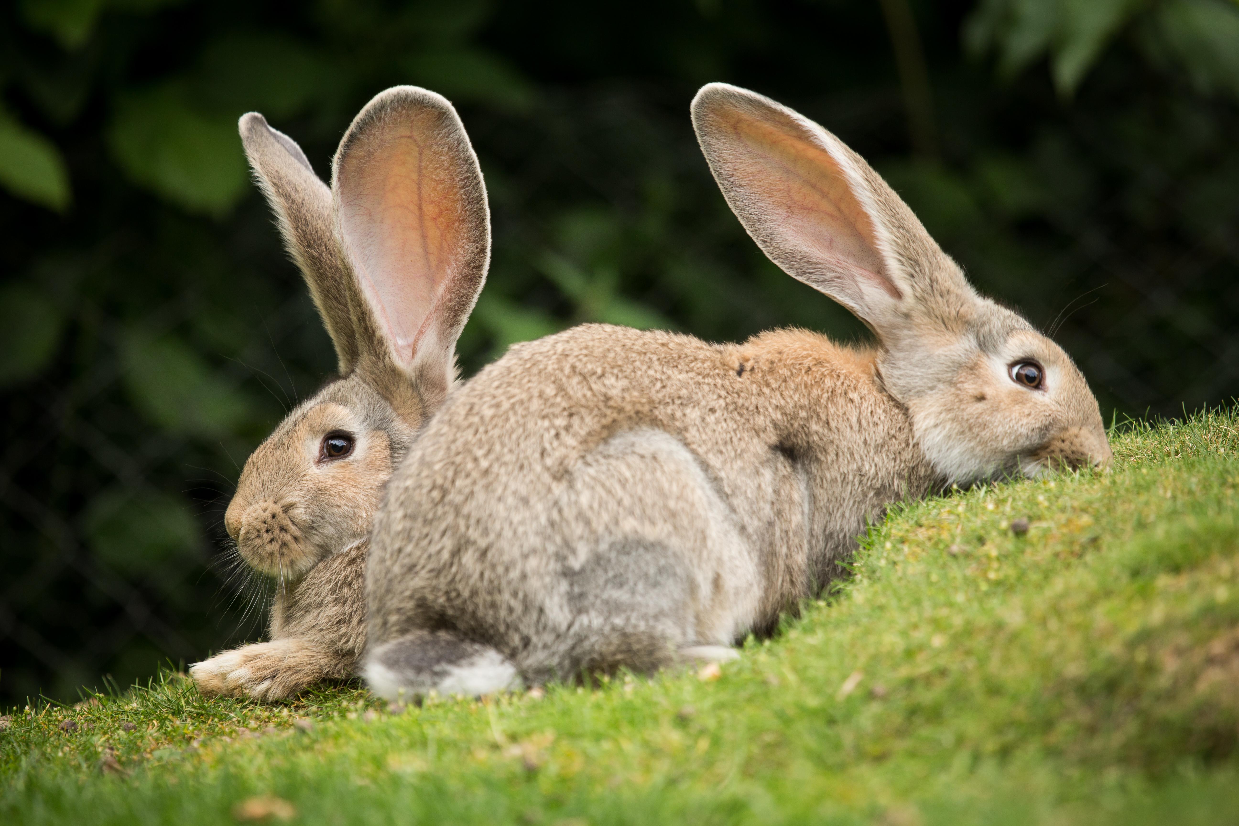 кролик трава  № 1964049  скачать