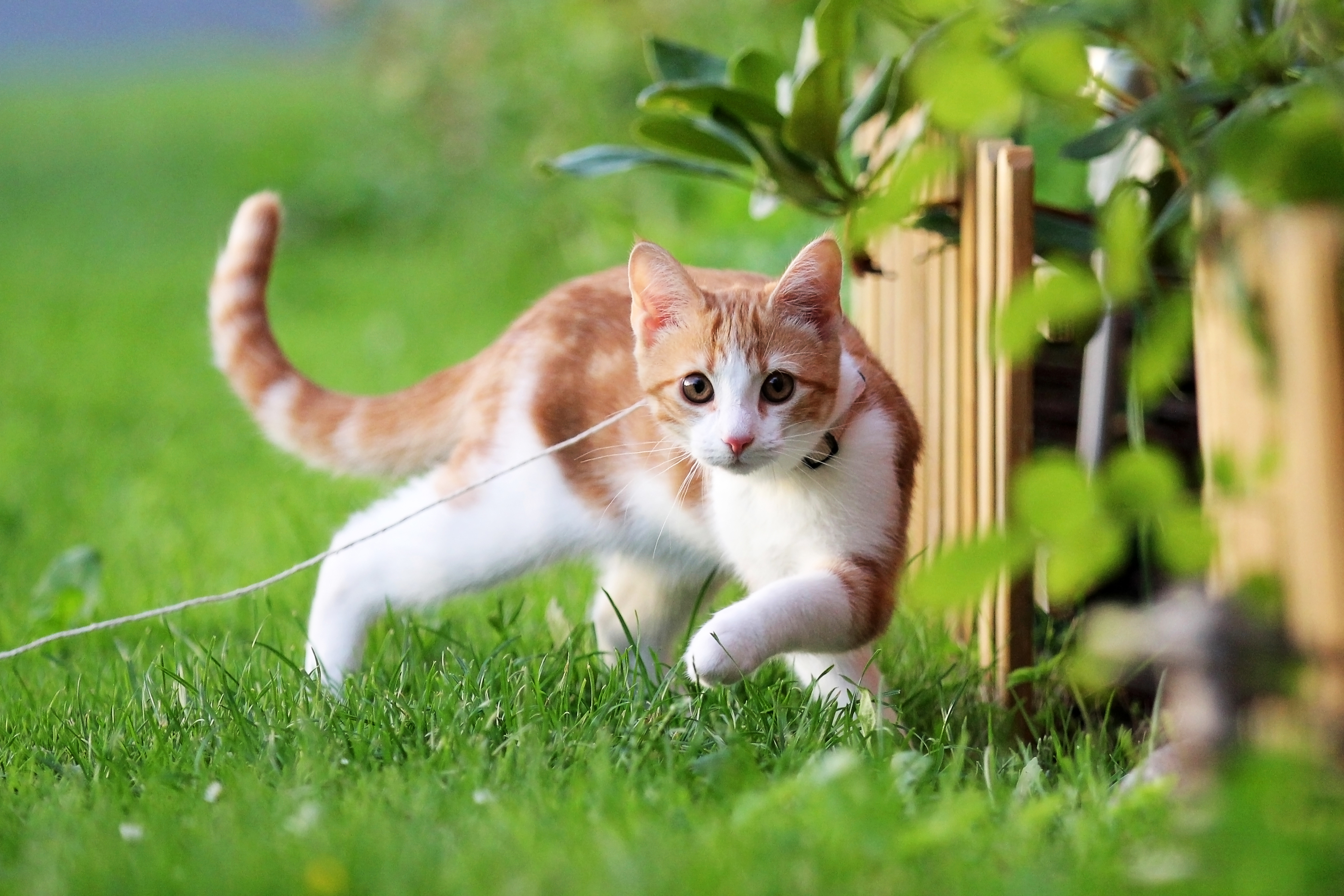 природа животные рыжий кот  № 941012  скачать