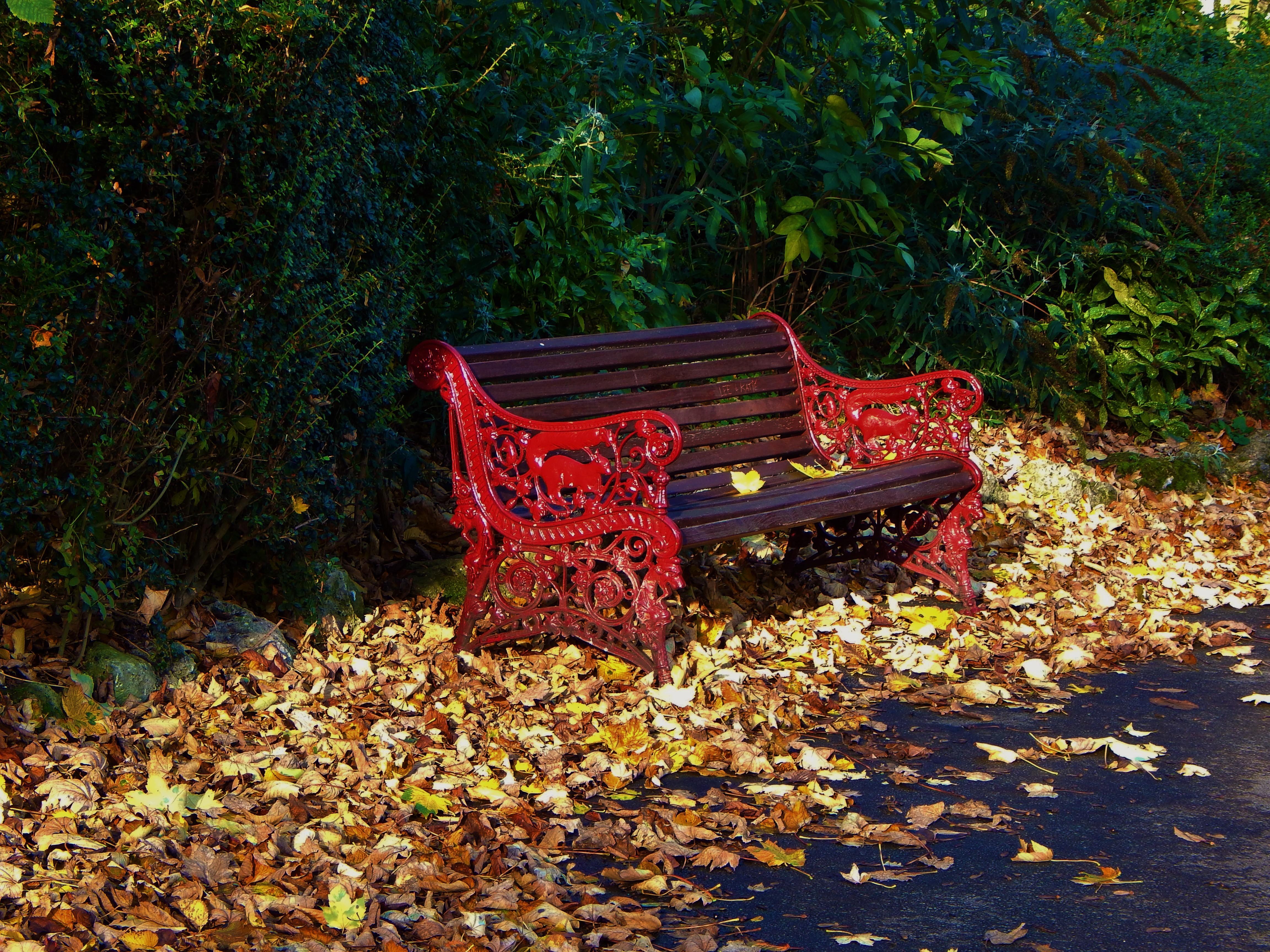 осень листья лавочка парк загрузить