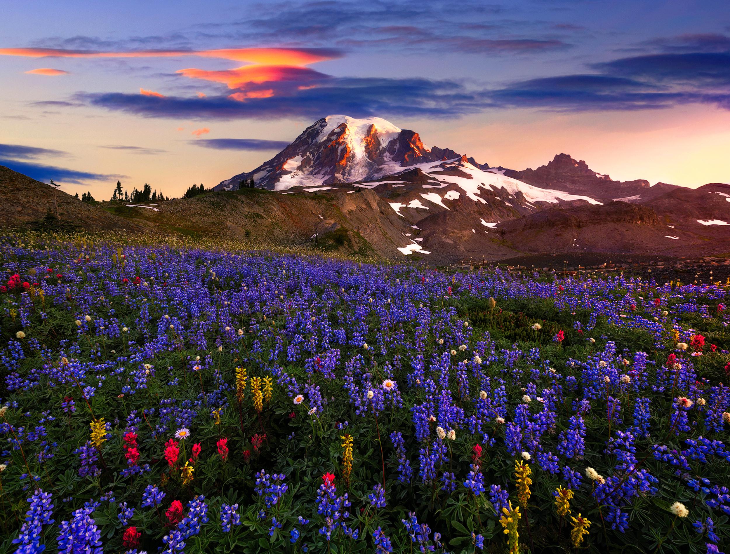 цветы поляна горы холм небо  № 3836122  скачать