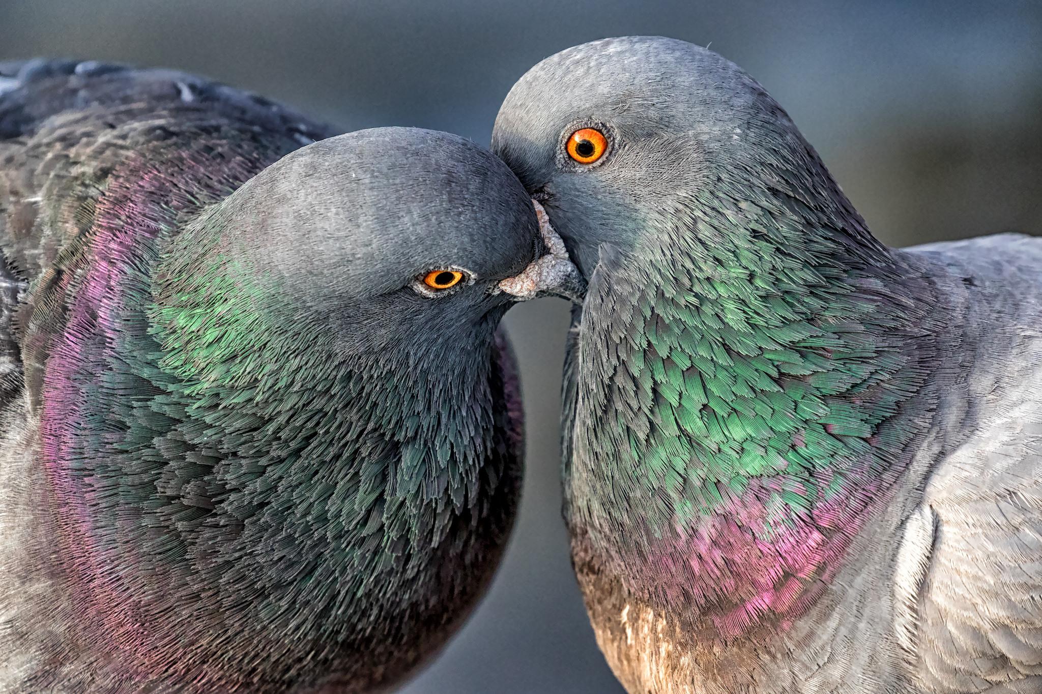 выполнены фото поцелуя птички вред может нанести