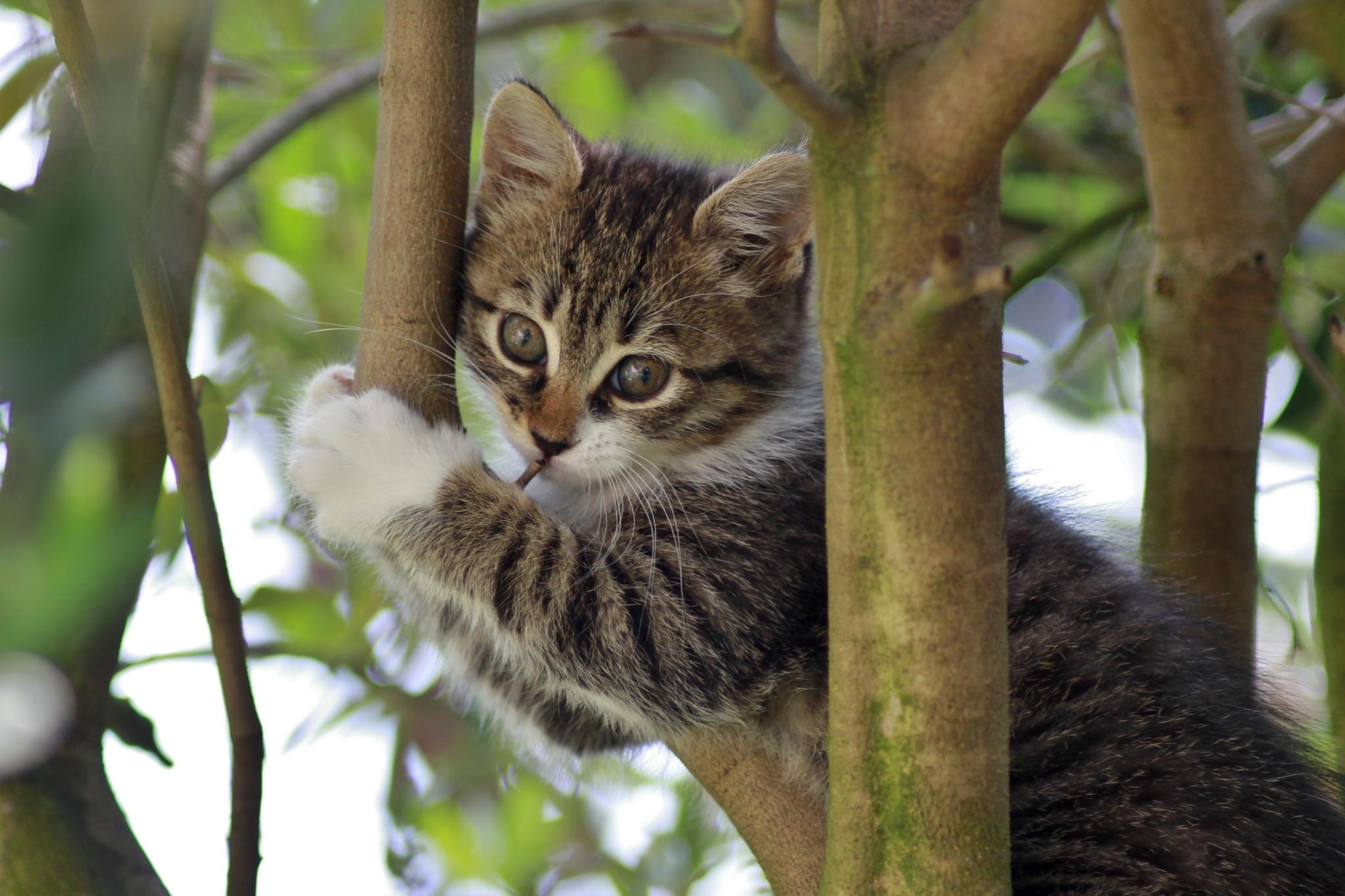 фото кошек на дереве движением