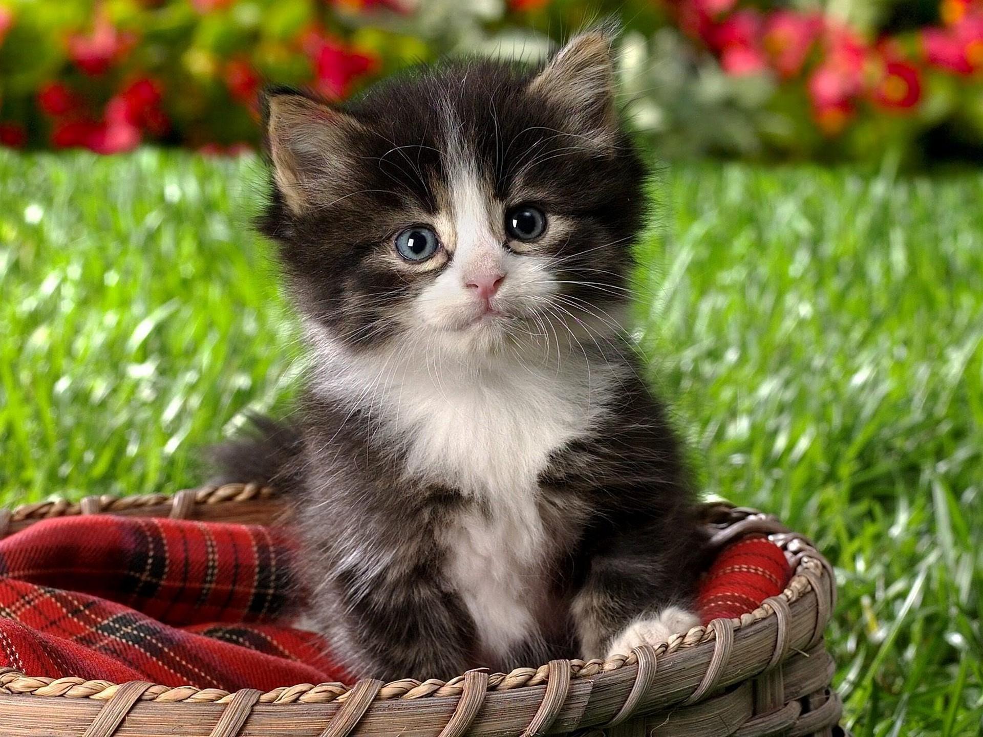 удивительные картинки котят каждого урока