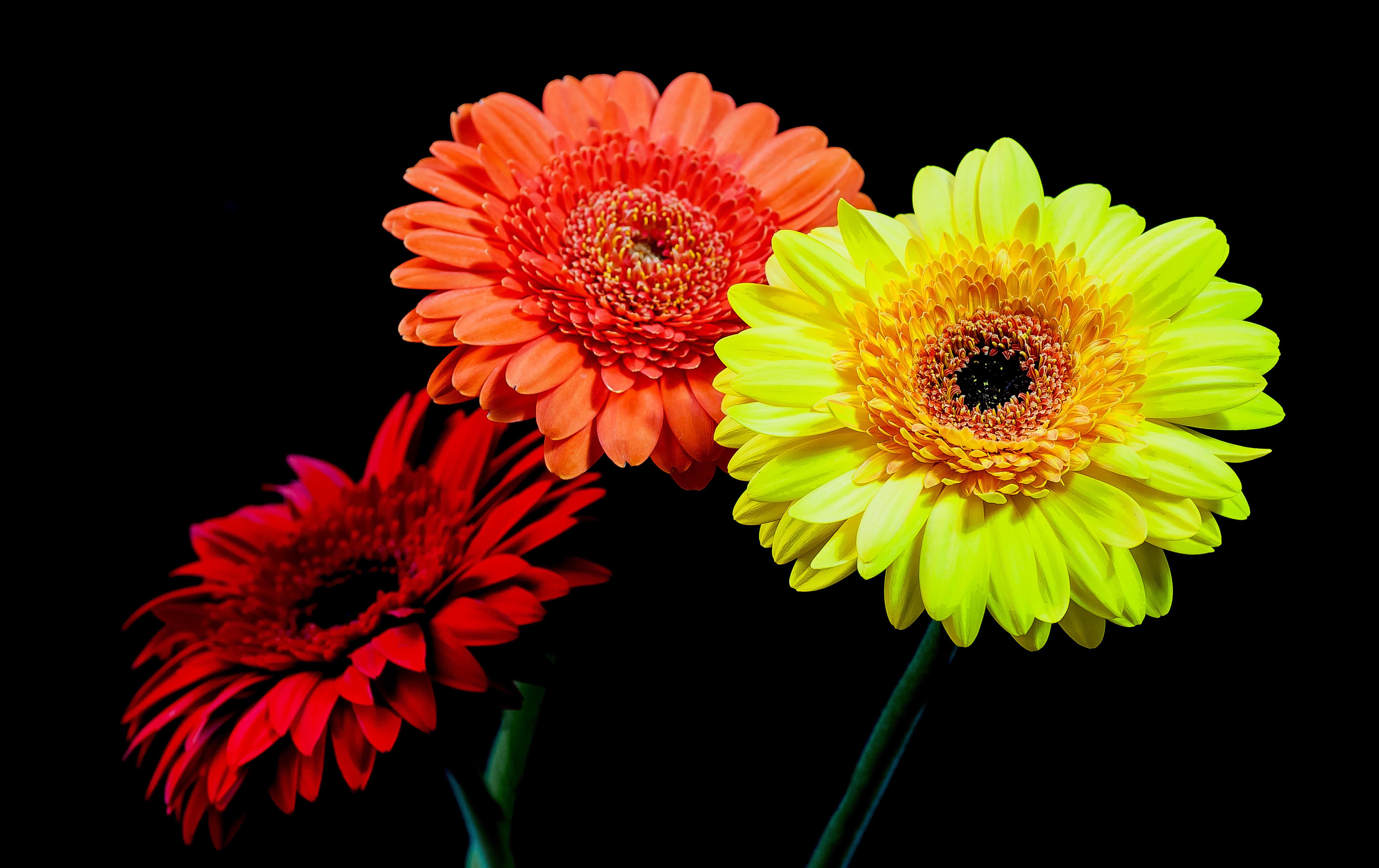 Картинка три цветка на черном фоне маркты обычно