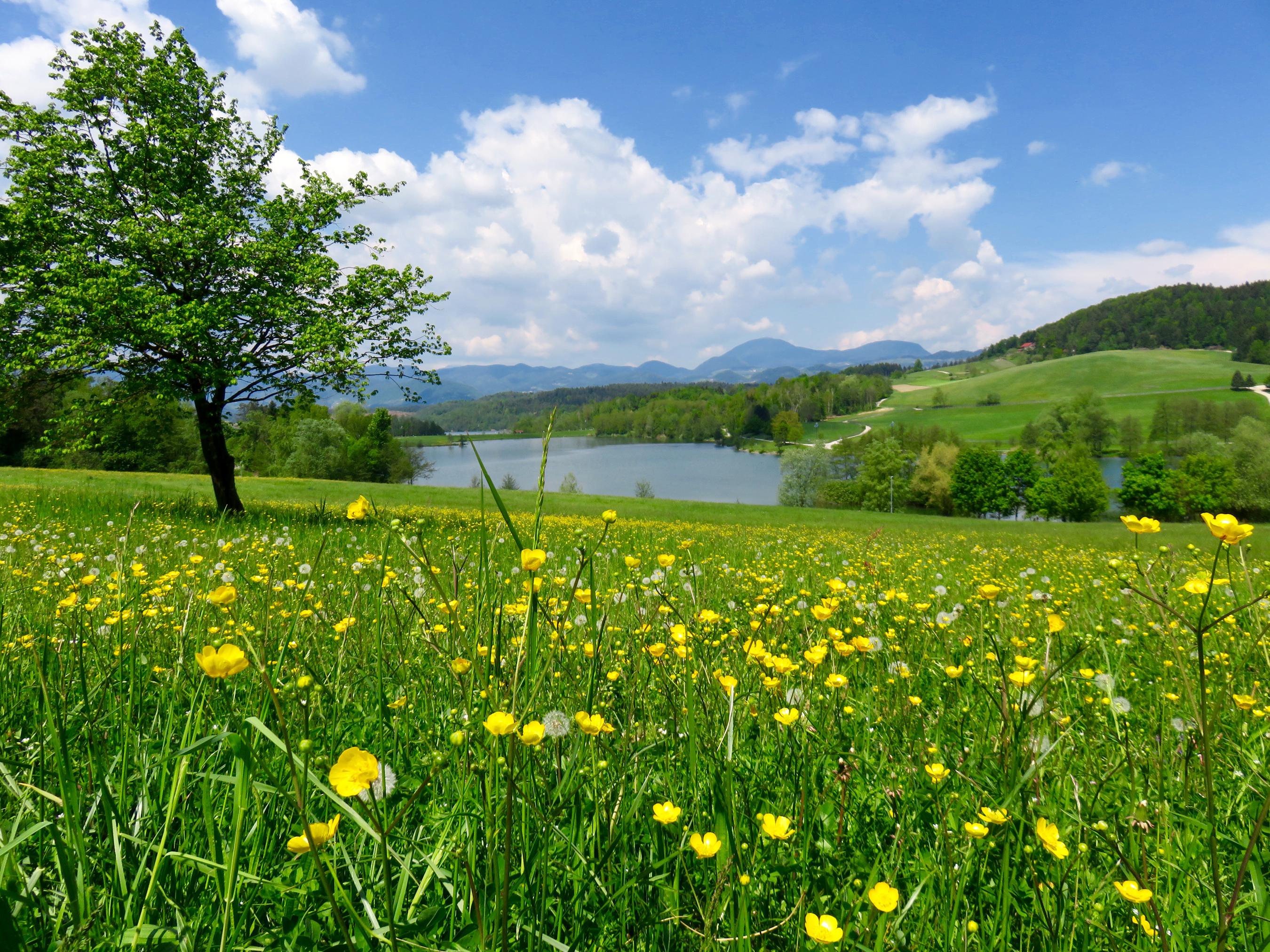 деревья природа цветы река скачать