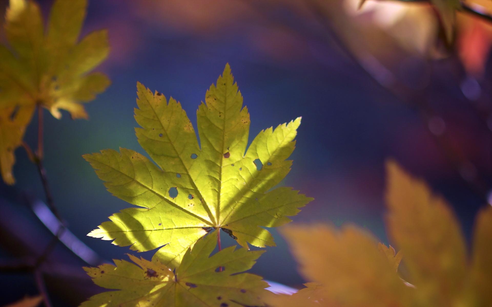 природа лист осень  № 543298 бесплатно
