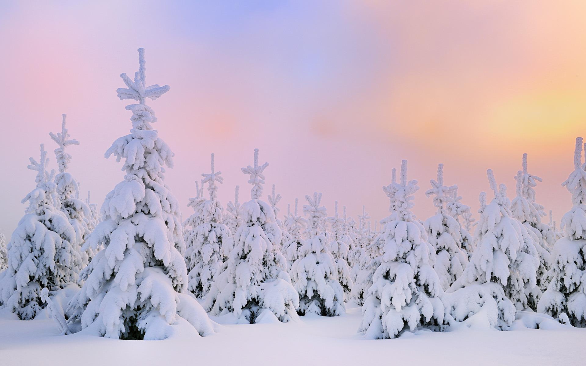 снег плантация snow plantation  № 443591 бесплатно