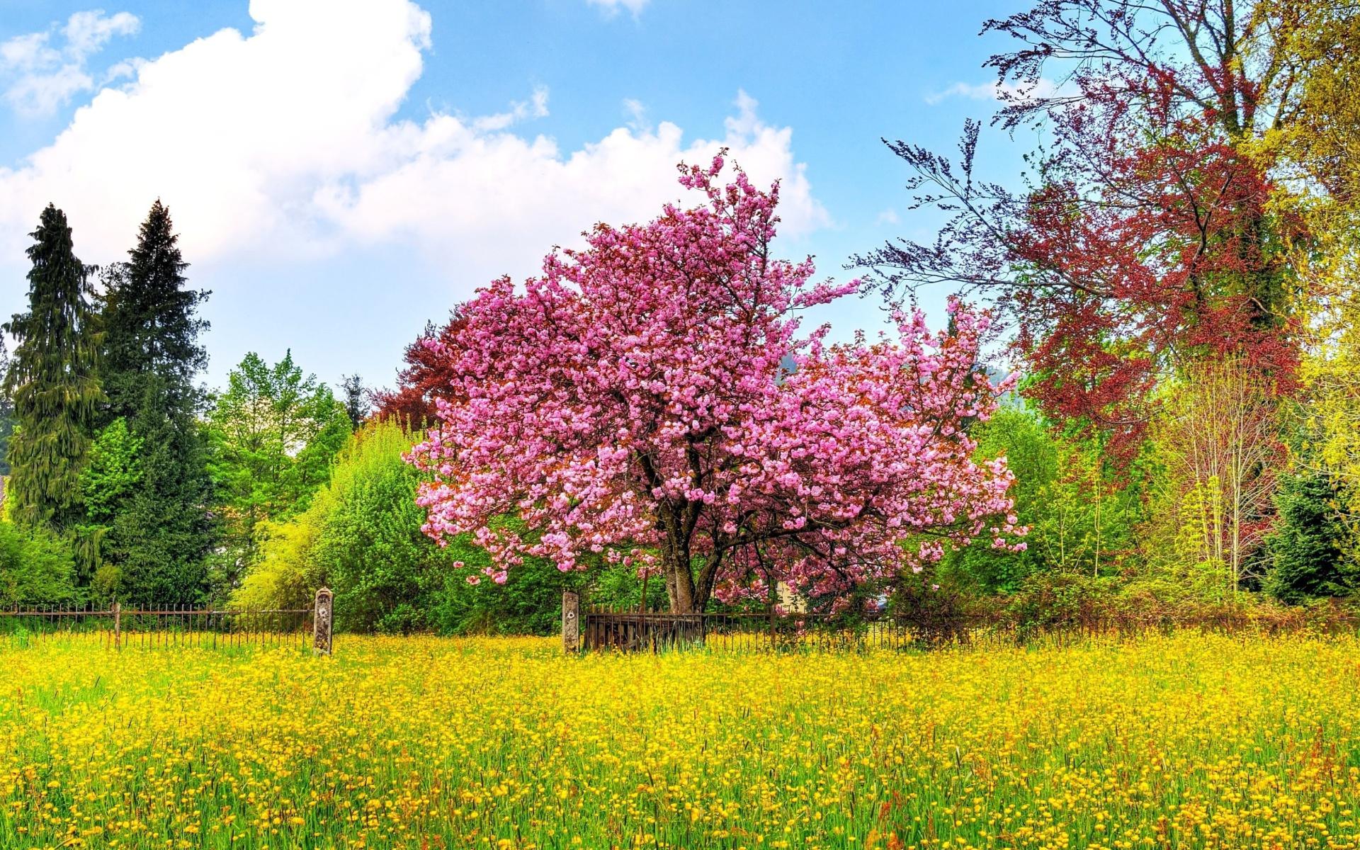 Картинки природы весны