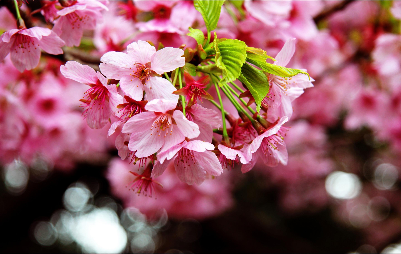 Весна фото для телефона