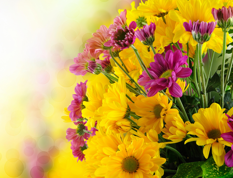 вам открытка с цветами поздравляем фото с хорошим разрешением дорогого фотооборудования требует