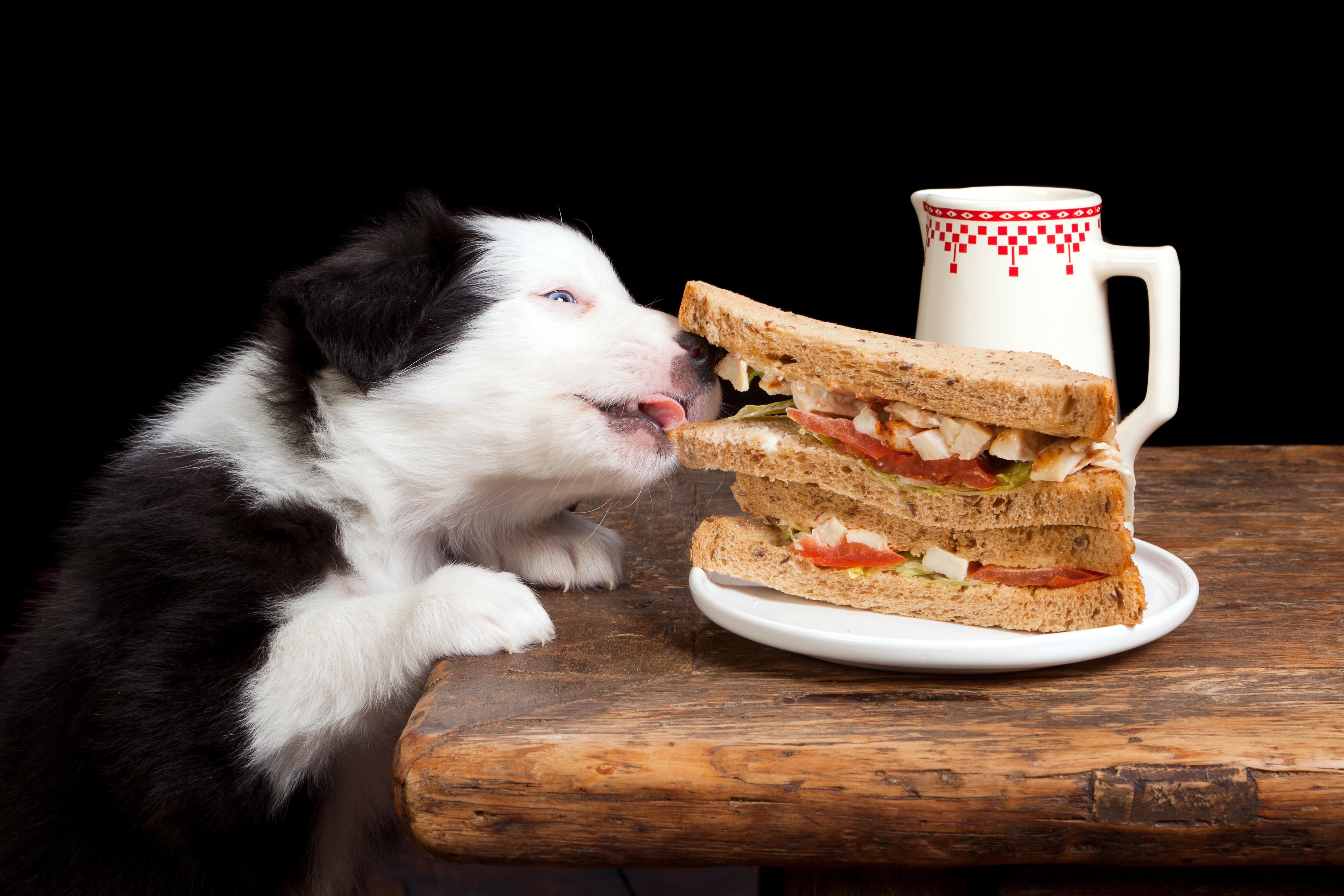 Картинки, смешные картинки еды и животных