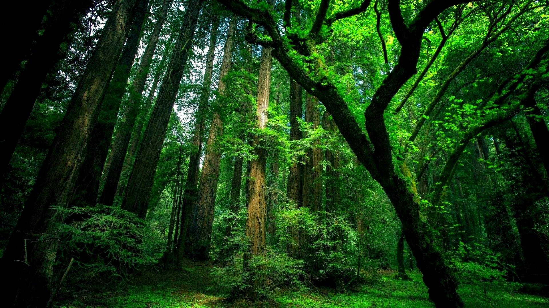 природа деревья графика лес nature trees graphics forest скачать