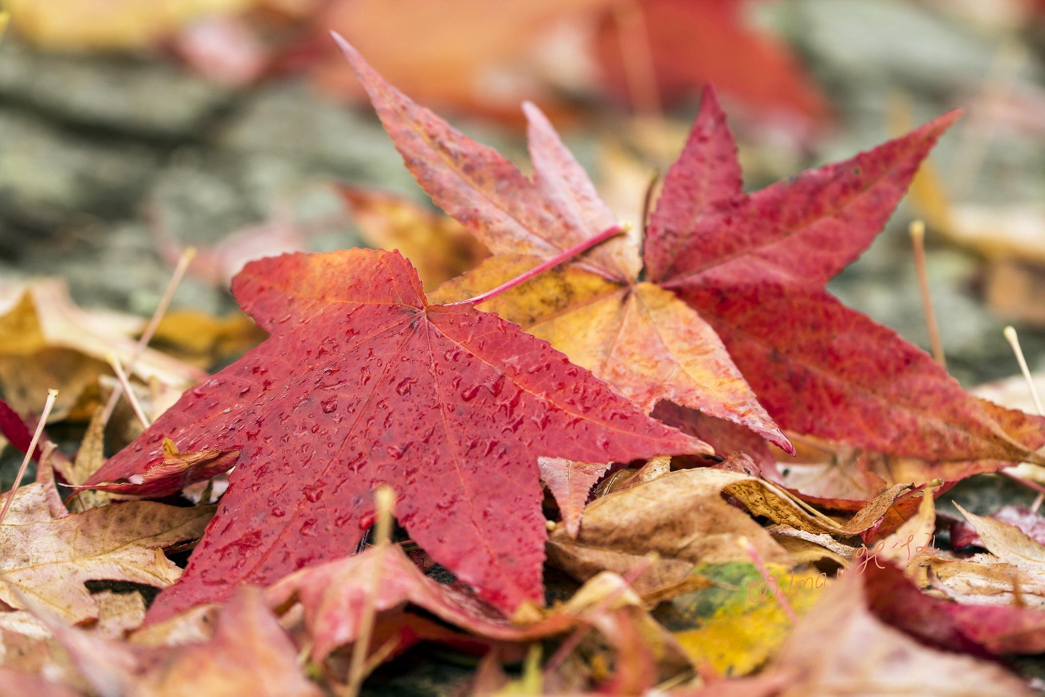 природа лист осень  № 543278 без смс