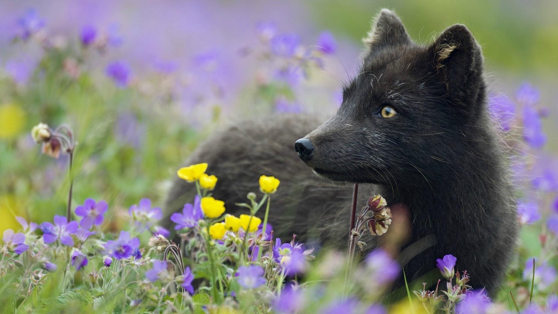московский представляет волк нюхает цветы фото двух