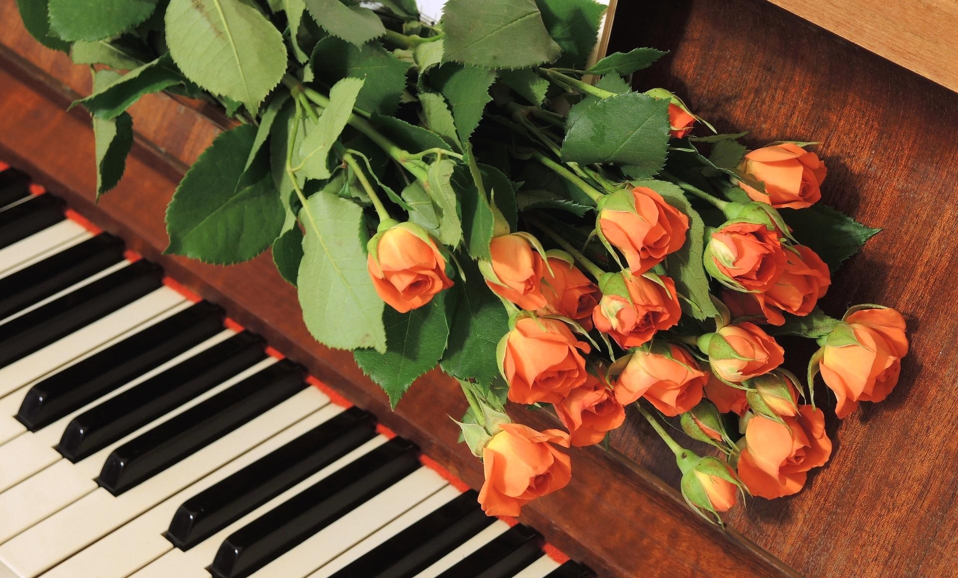 Музыкальная открытка цветочек, медведь картинках прикольными