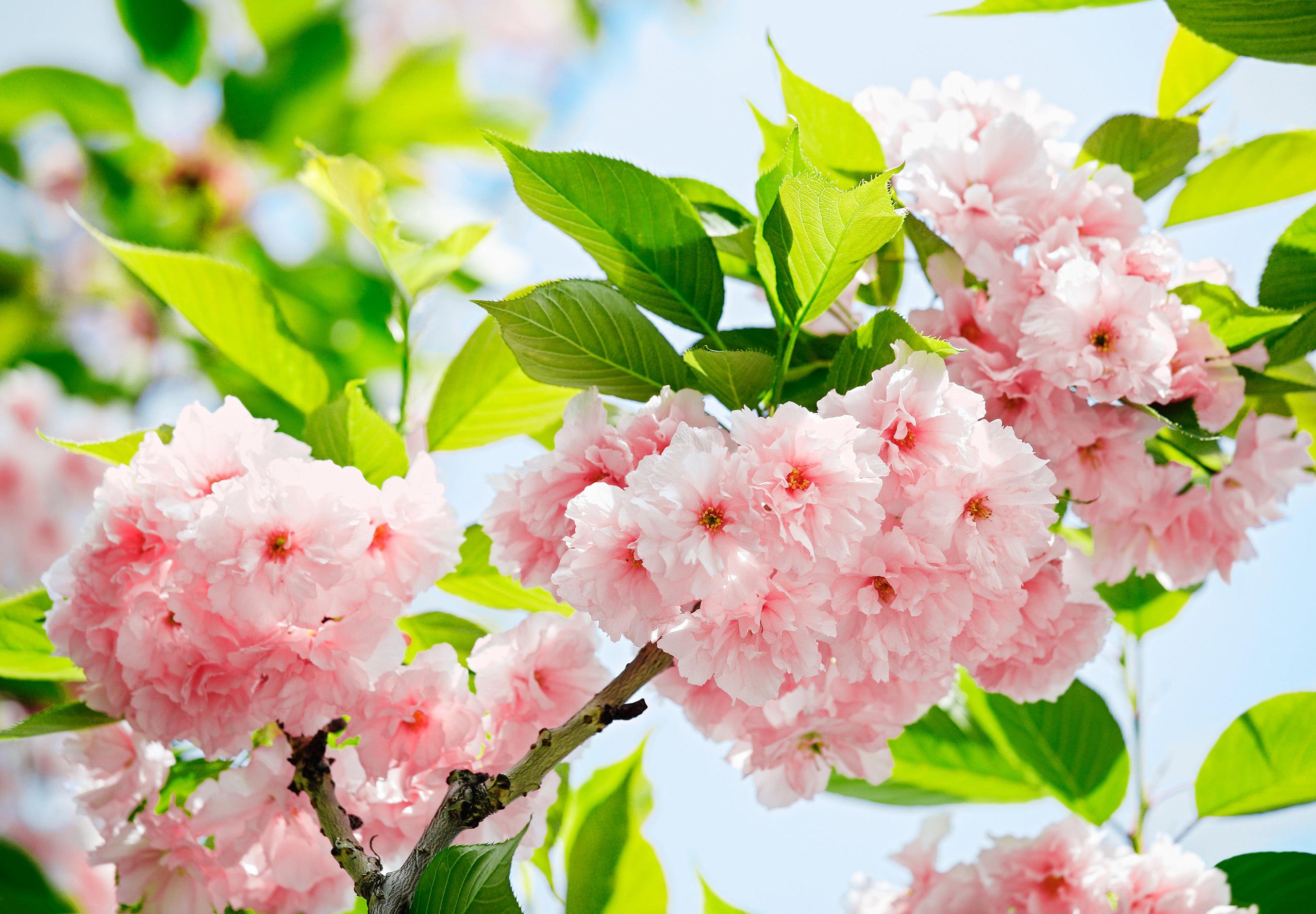 Цветы Фотообои Фото