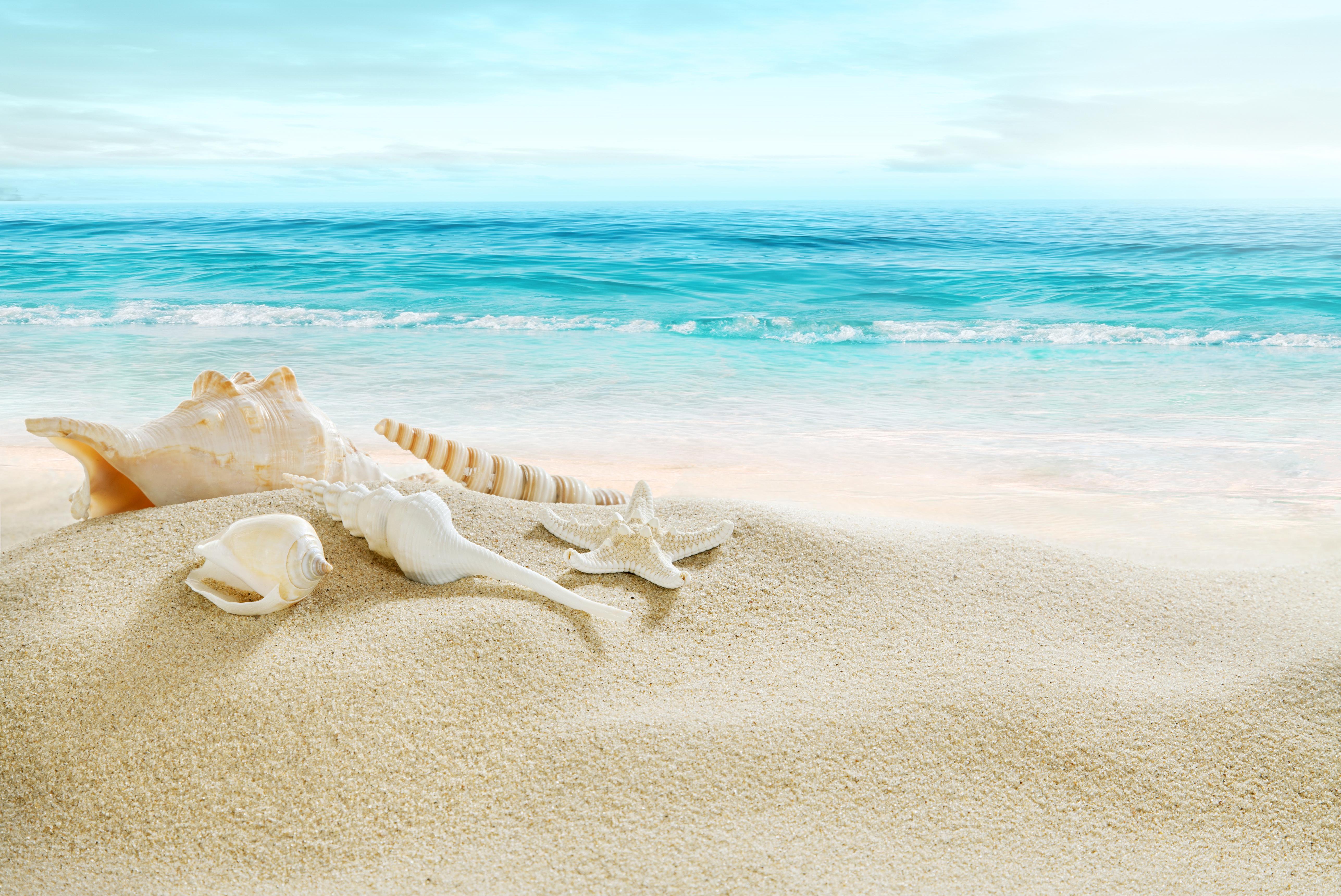 Ракушка на берегу море бесплатно