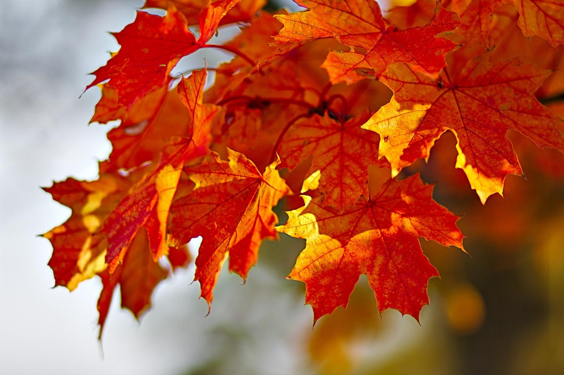 Имени, картинки с осенней листвой