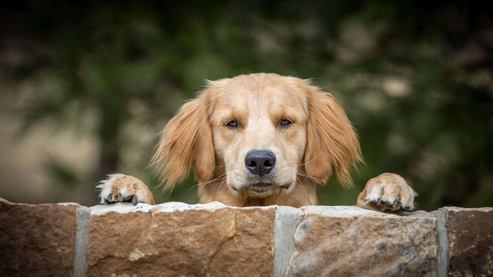 Стена животное собака без смс