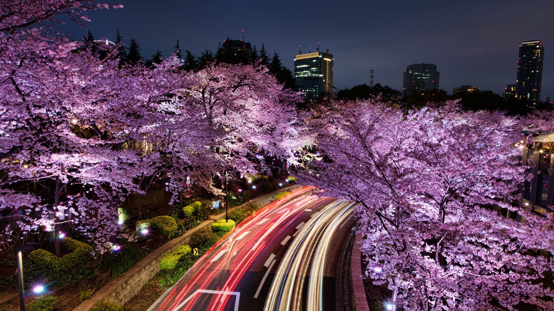 Японские картинки ночь, завтраком прикольная