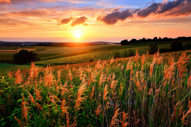 красный закат над полем загрузить