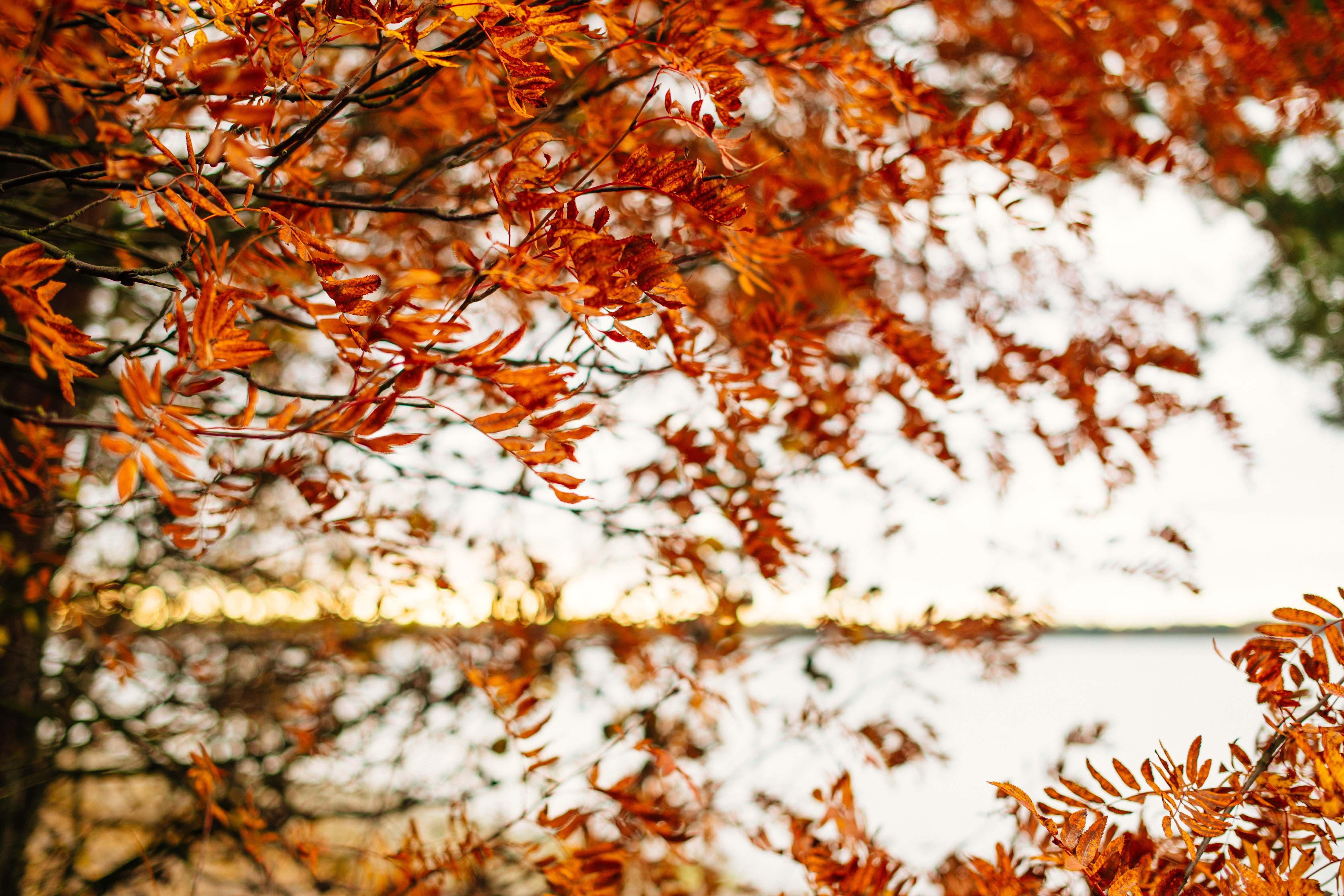 подарочные часы деревья с опавшей листвой картинки покатала плечах наставника